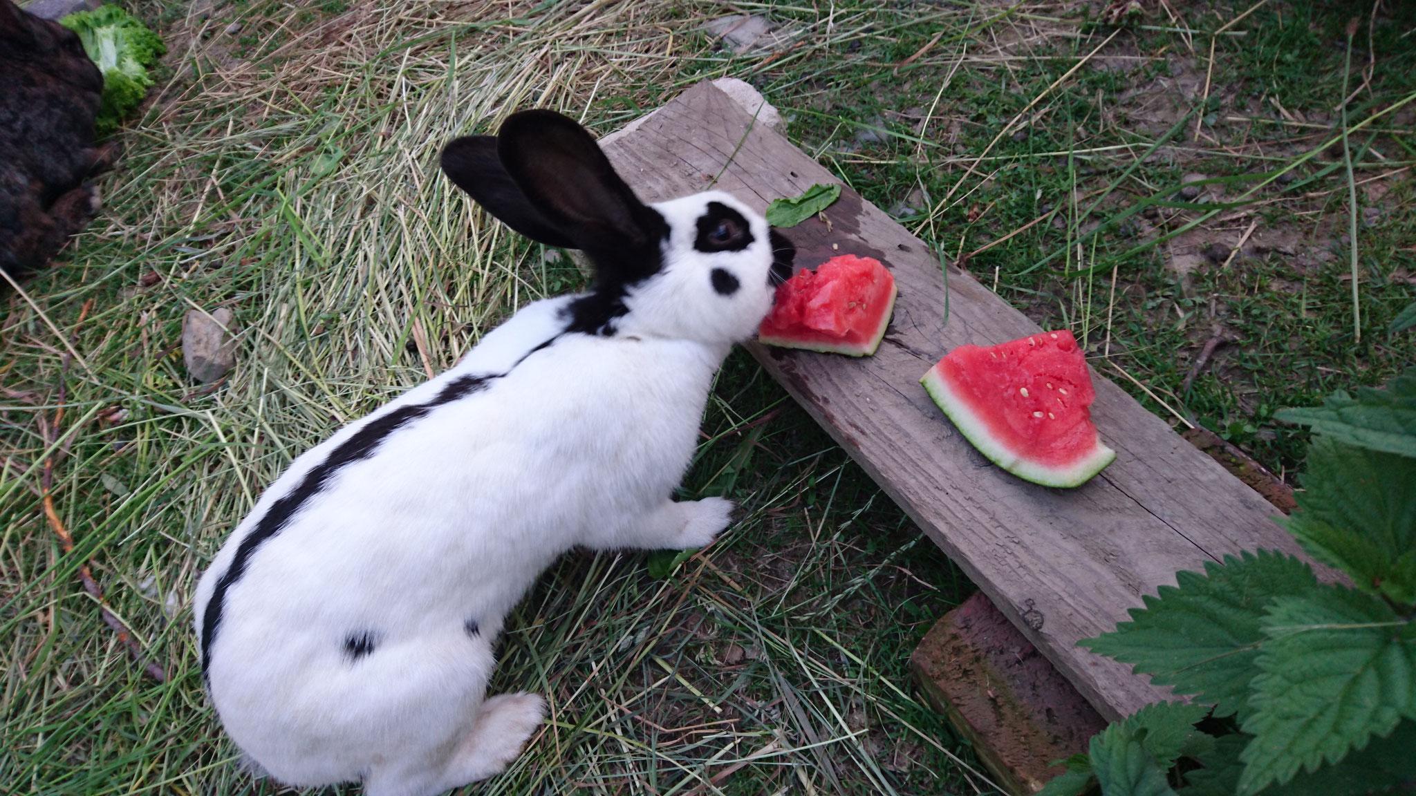 Melone, lecker und gut im Sommer zur Abkühlung. Foto von Nina.