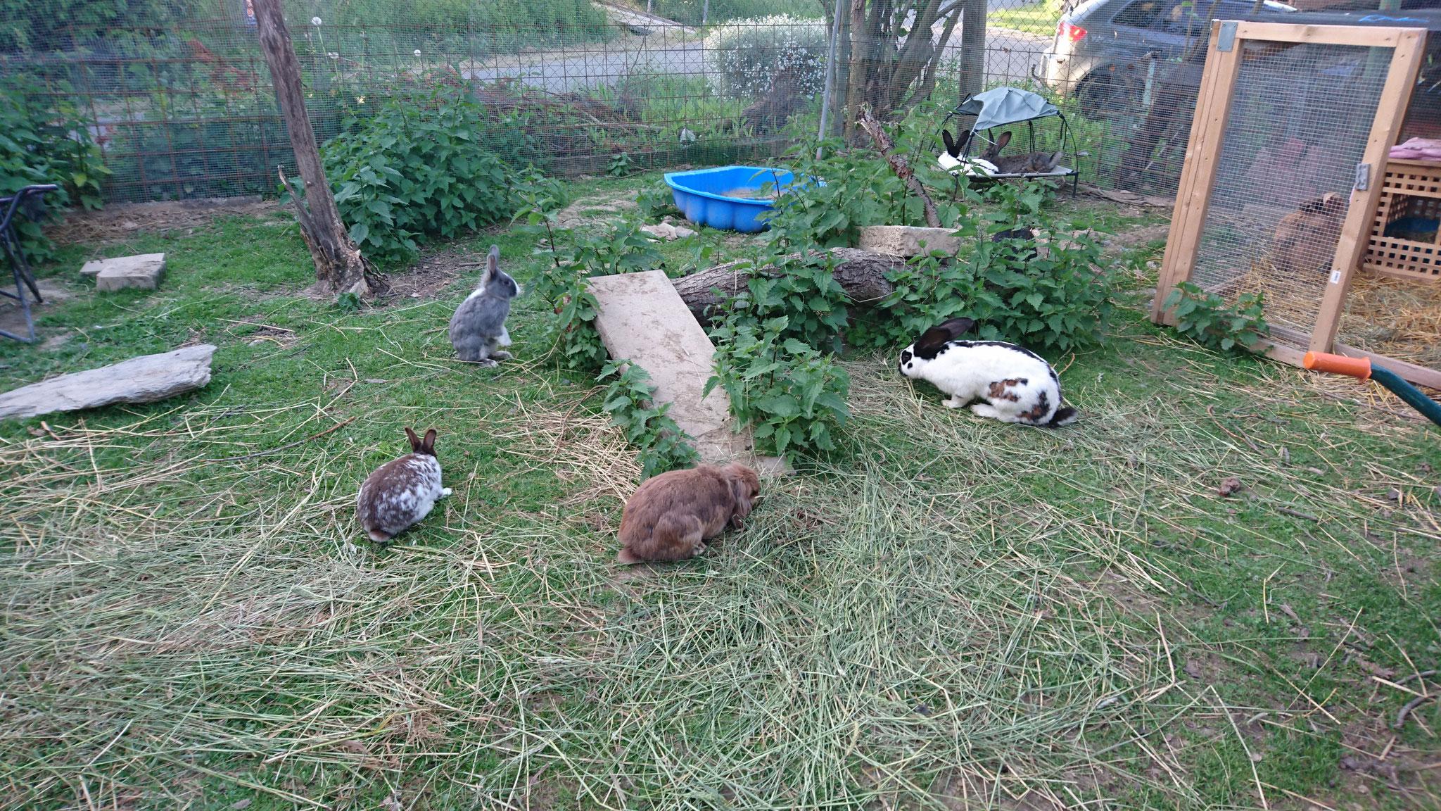 Ninas 100 m2  Aussengehege bietet Platz für viele Tiere