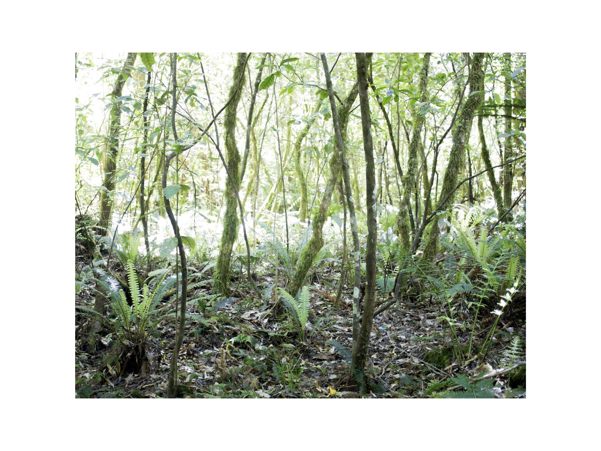 Unterholz 1