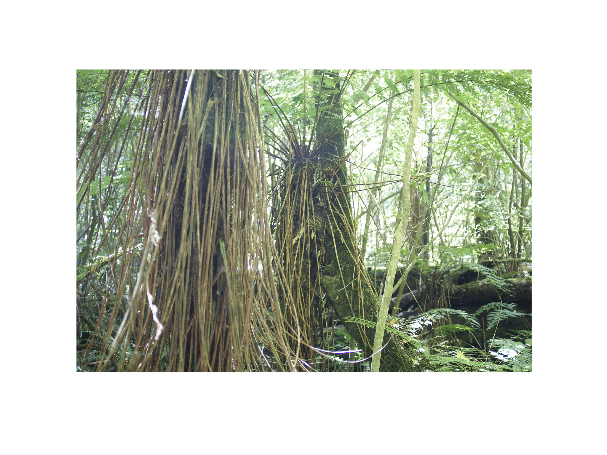 Unterholz 5