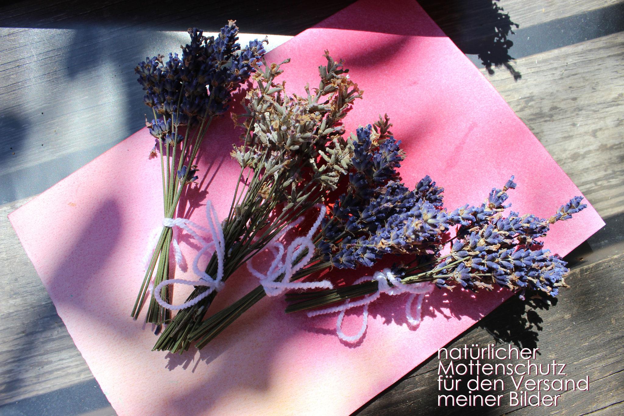 Regelmäßig mit Pflanzen und Blumen zu arbeiten, erdet und beruhigt