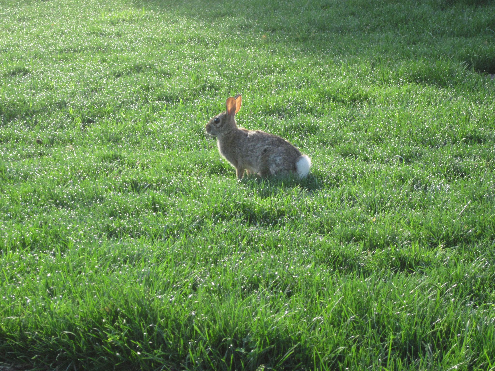構内を走る回るウサギ