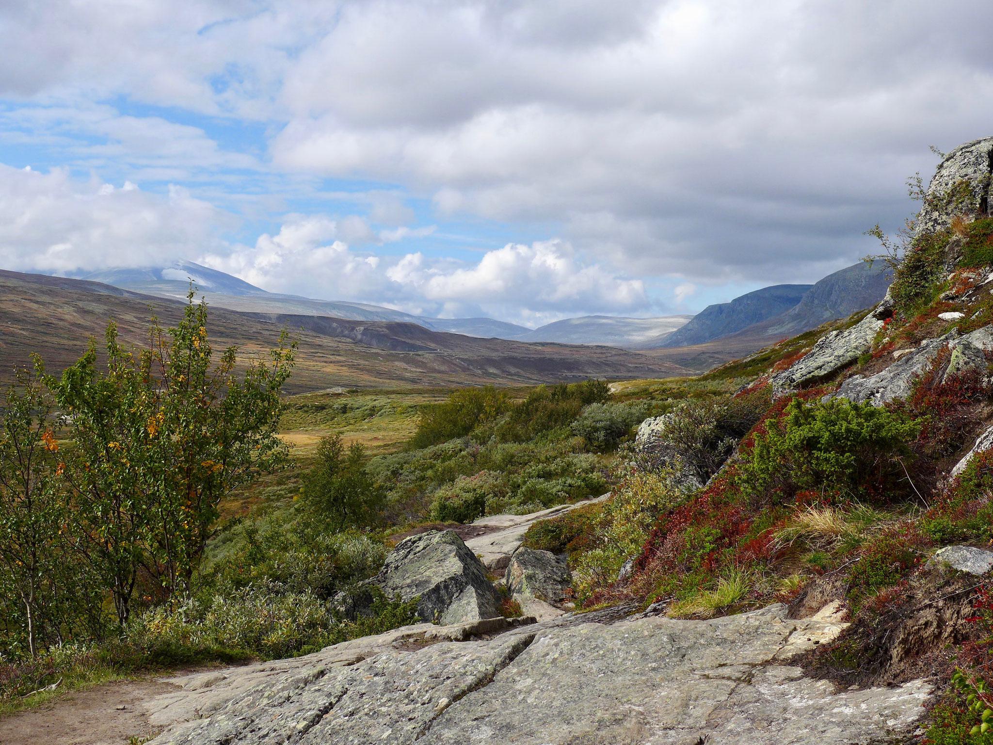 Man kann weit in den Dovrefjell wandern, rechts der wolkenverdeckte Snøhetta.
