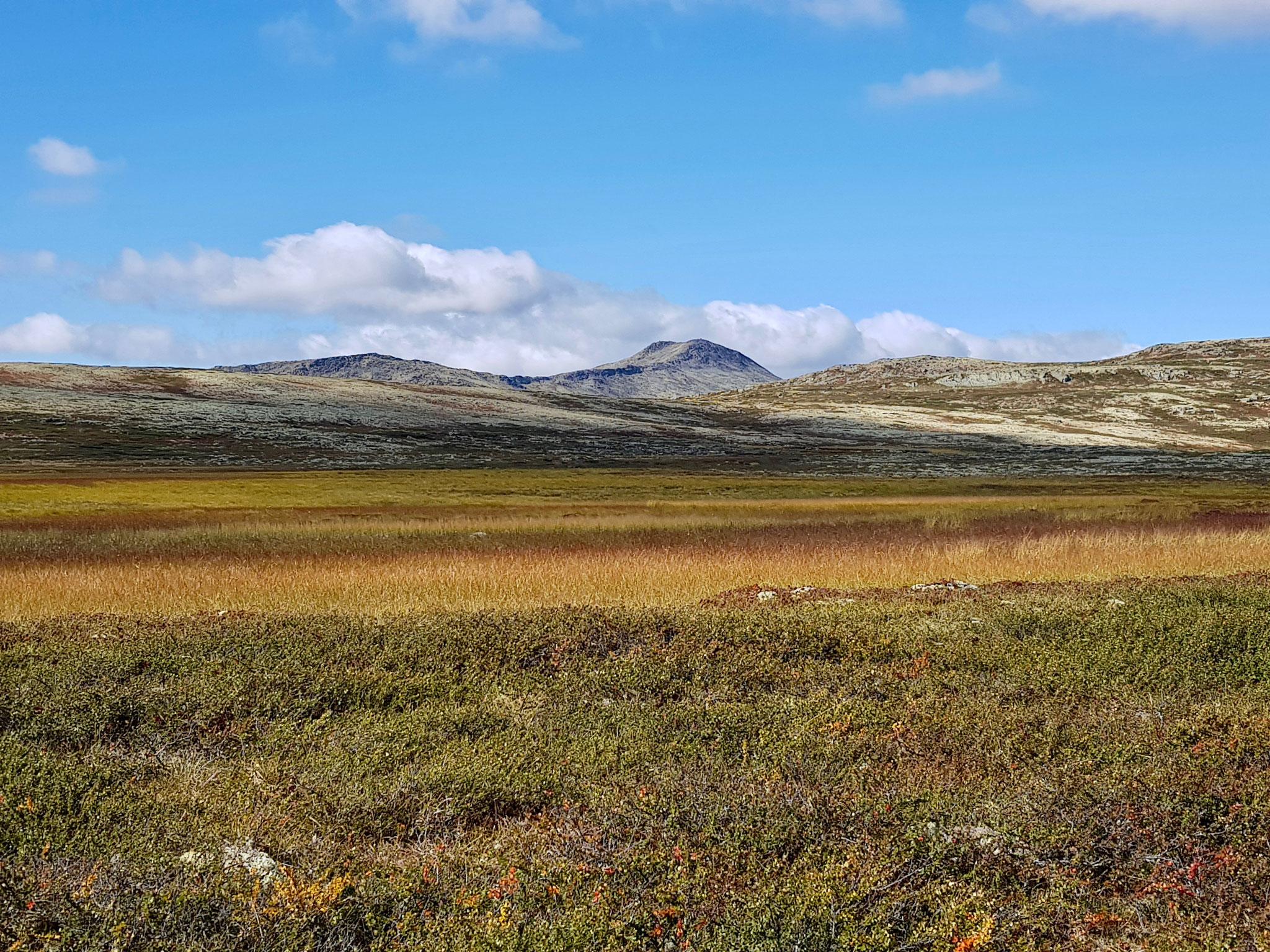 Blick auf das Moor auf dem Rückweg.