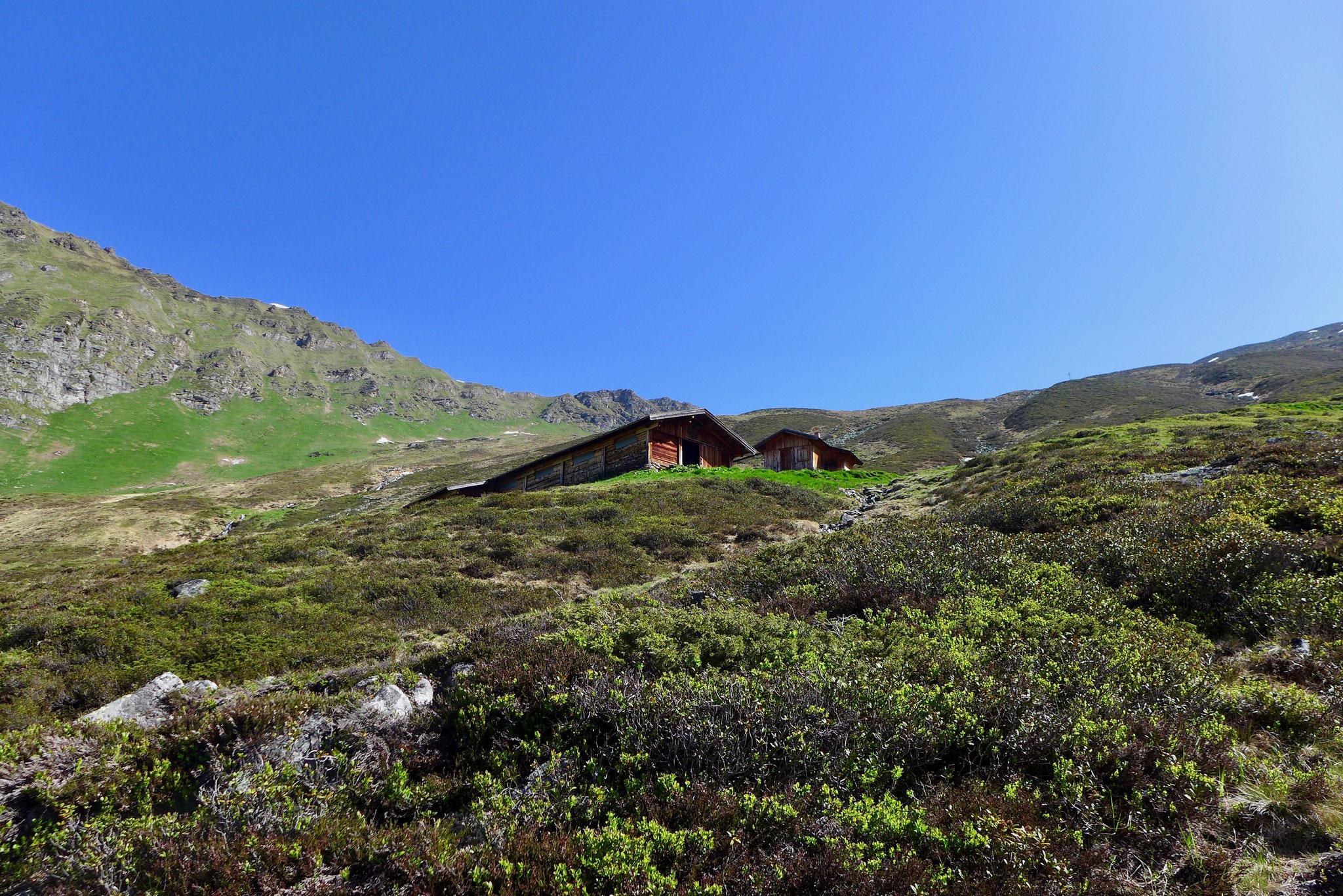 Vorbei an einer Hochalm ging es weiter Richtung Hütte.