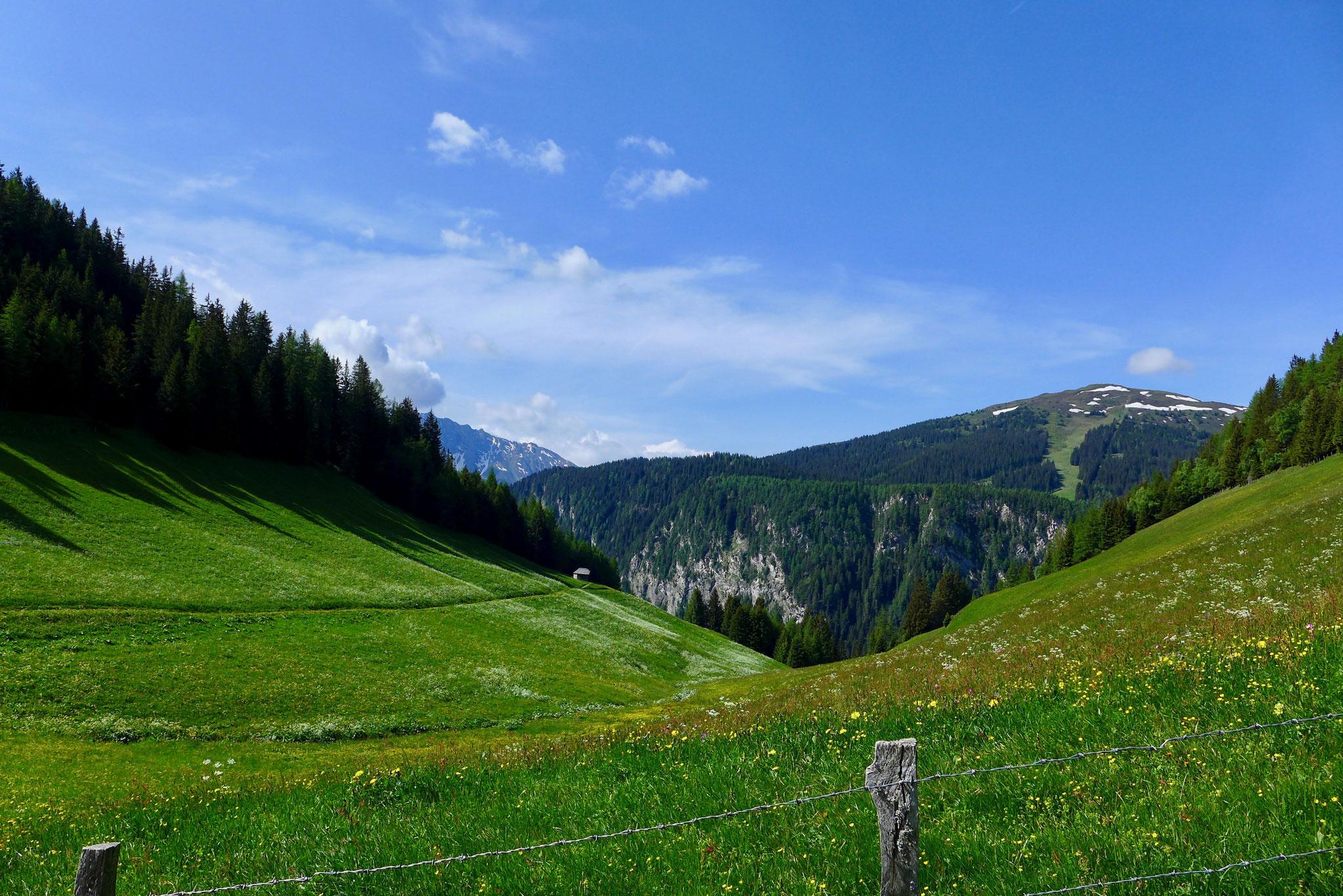 Über saftig grüne Almwiesen geht es Richtung Gipfel.