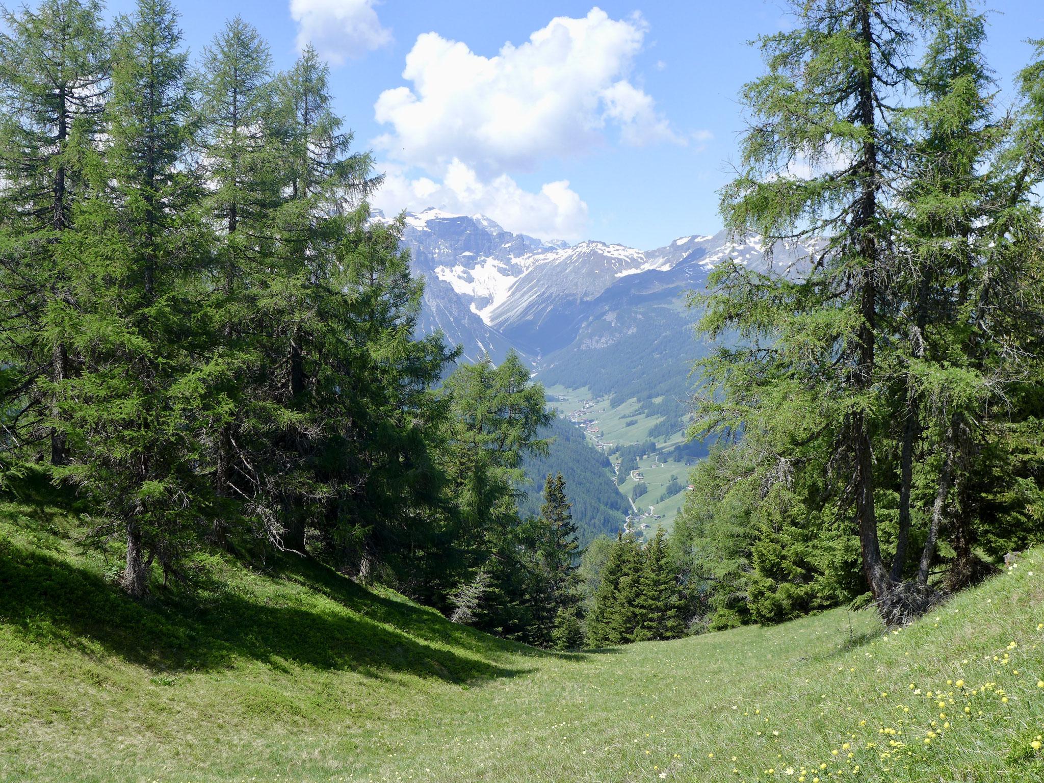 Satt grüne Wiesen und tolle Panorama wohin man auch sieht.