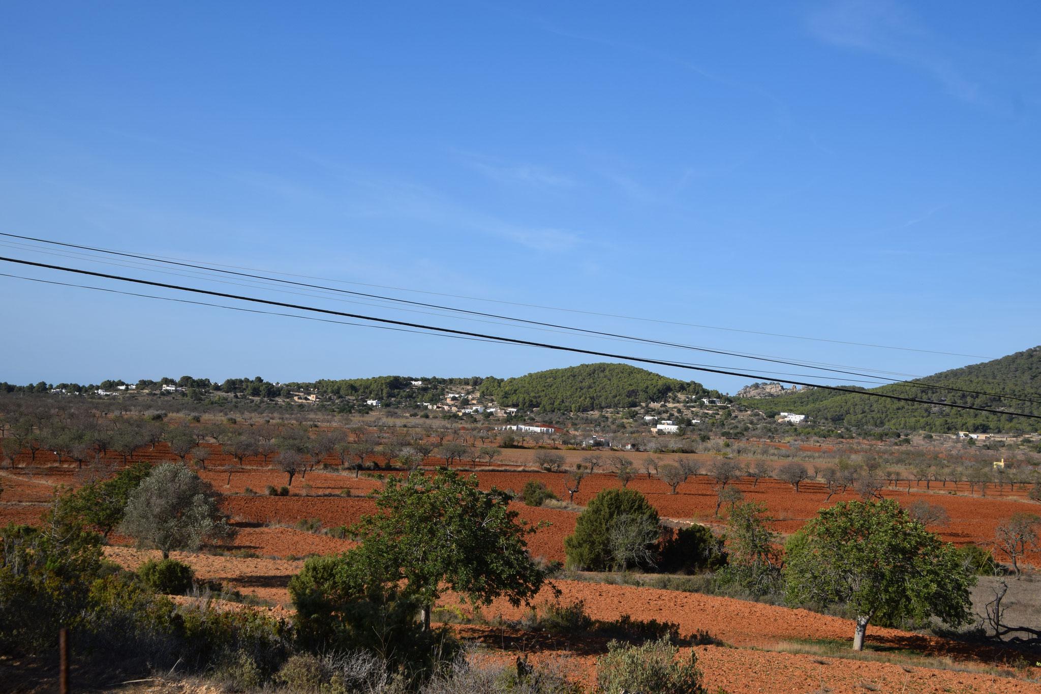 Sehr gepflegte Oliven- und Mandelbaumfelder