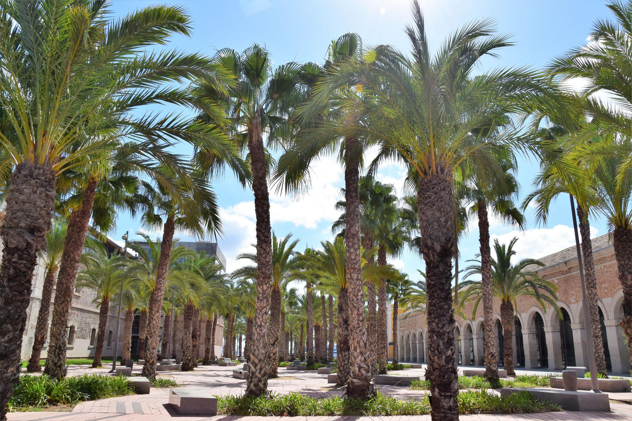 "Park hinter der Technischen Universität ""Universidad Politécnica de Cartagena"""
