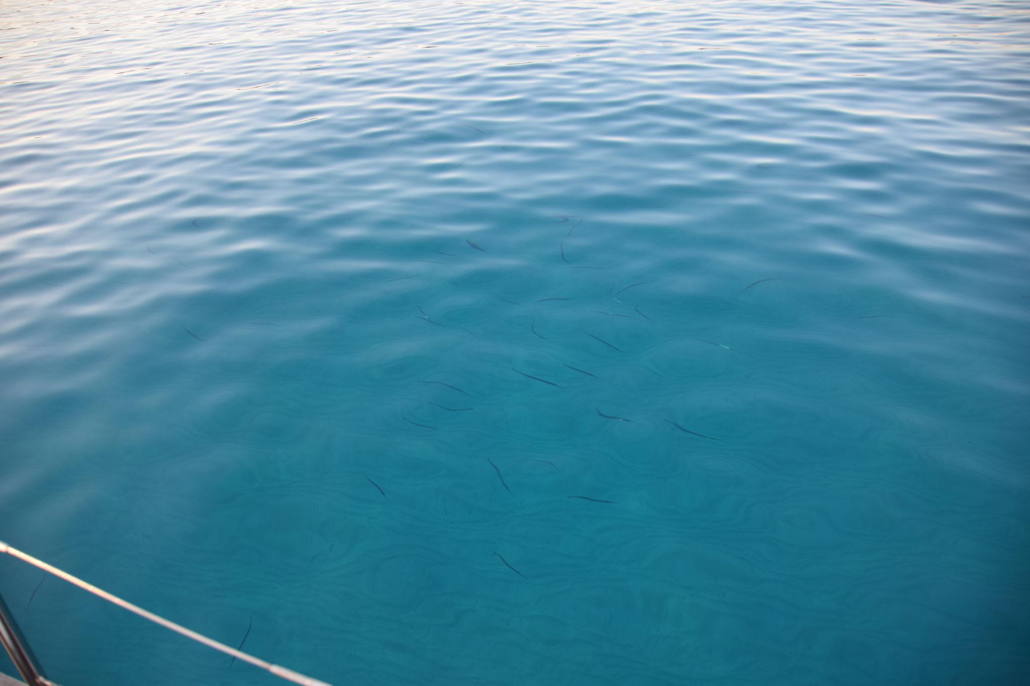 Am nächsten Morgen schwimmen viele Fische um uns herum...