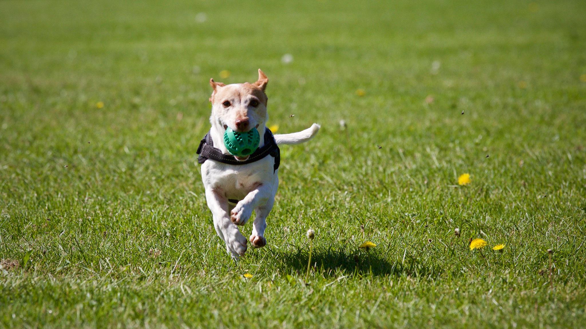 CDU macht Situation des Hundefreilaufplatzes Vorst zum Thema im Hauptausschuss