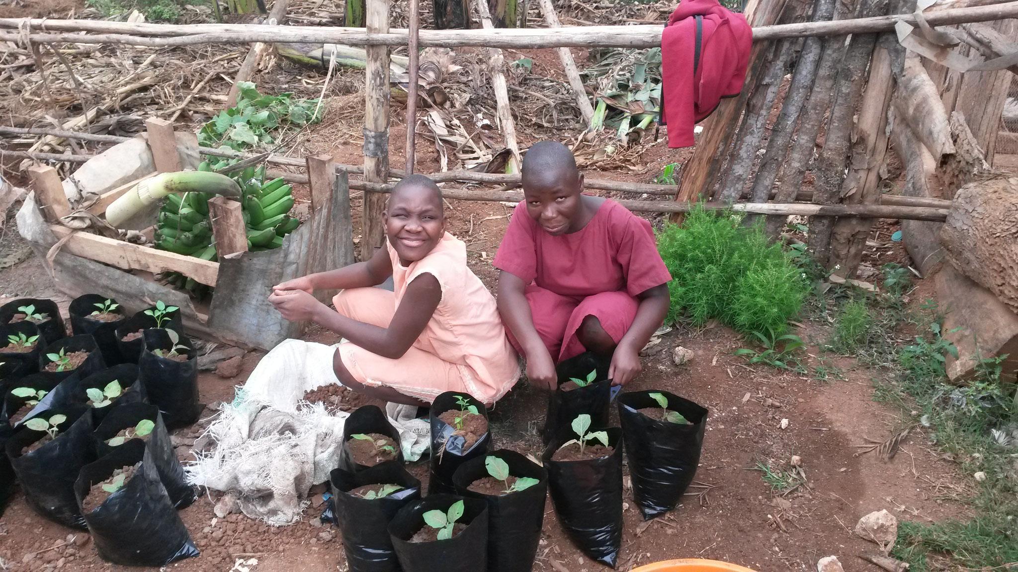 Pflanzen und Paprika setzlingen