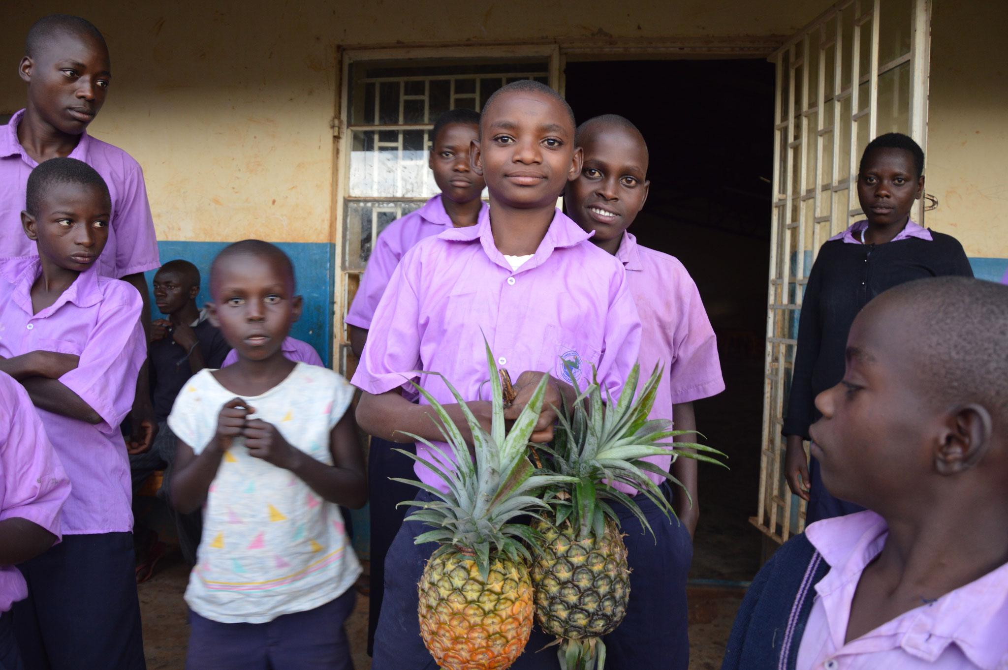 Ananas (Auf der lokalen Sprache heißt Ananas = Manasi)
