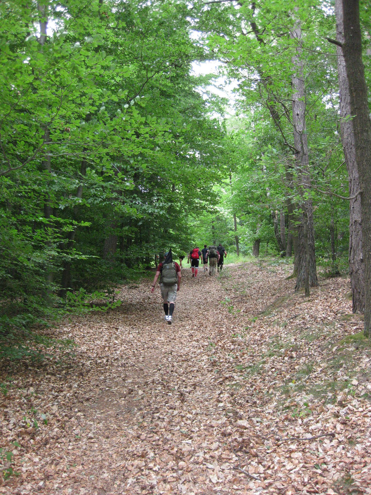 Mitten hinein in den Pfälzer Wald