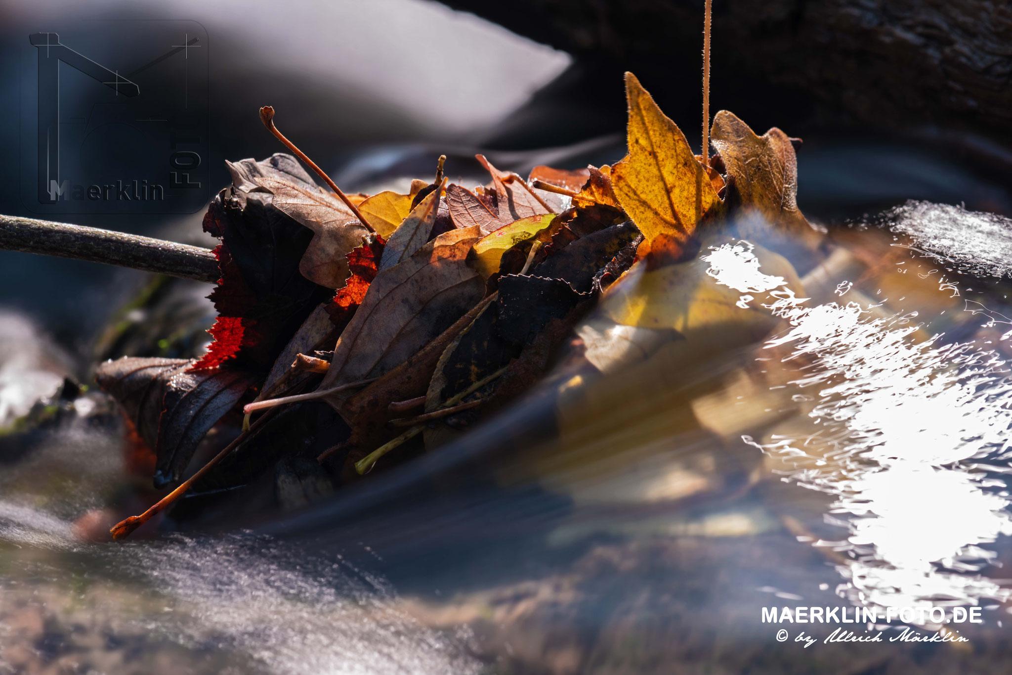 Herbstlaub im fließenden Wasser, Steinach bei Iselshausen