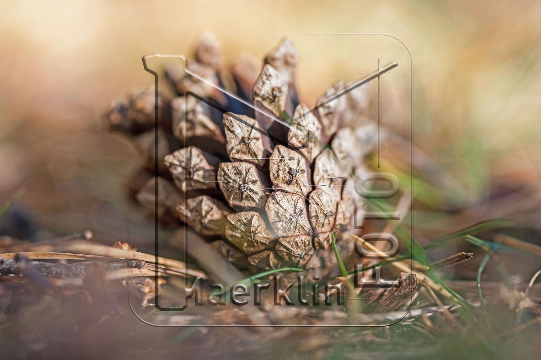Heckengäu, Kiefernzapfen