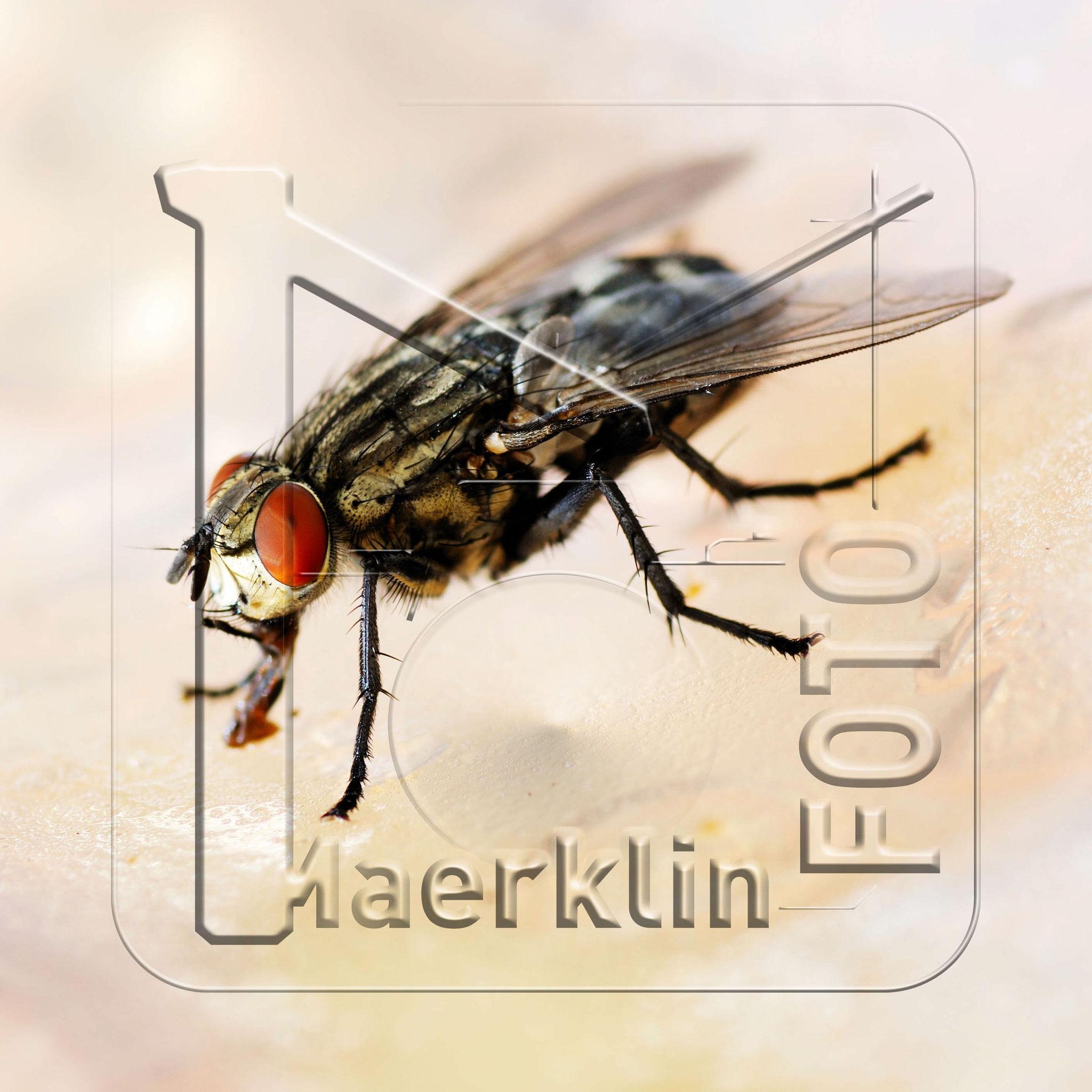 Heckengäu, Fliege