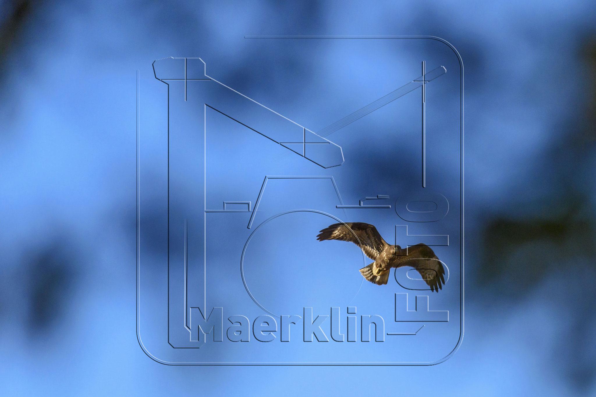 Heckengäu, Mäusebussard