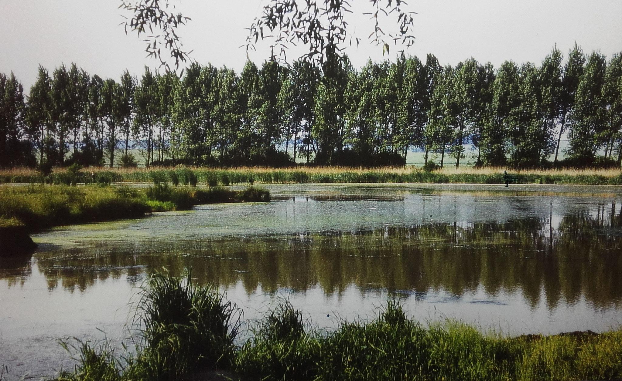 Der Blick von Süd in Richtung Tüngeda. Hier wurde am liebsten gebadet.