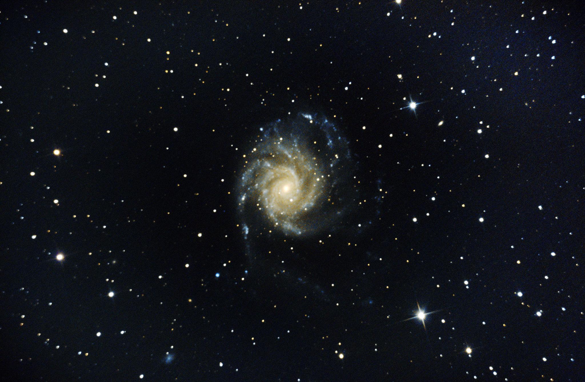 Galaxie M101 dite du moulinet (Grande Ourse) - Stéphane PICQUETTE -Newton 200/1000 - monture EQ6R-PRO, caméra ZWO 294MC refroidie, 70 poses de 120s, gain 310, 20 dark, 20 offset, 20 flat, traitement avec logiciel SIRIL et photoshop