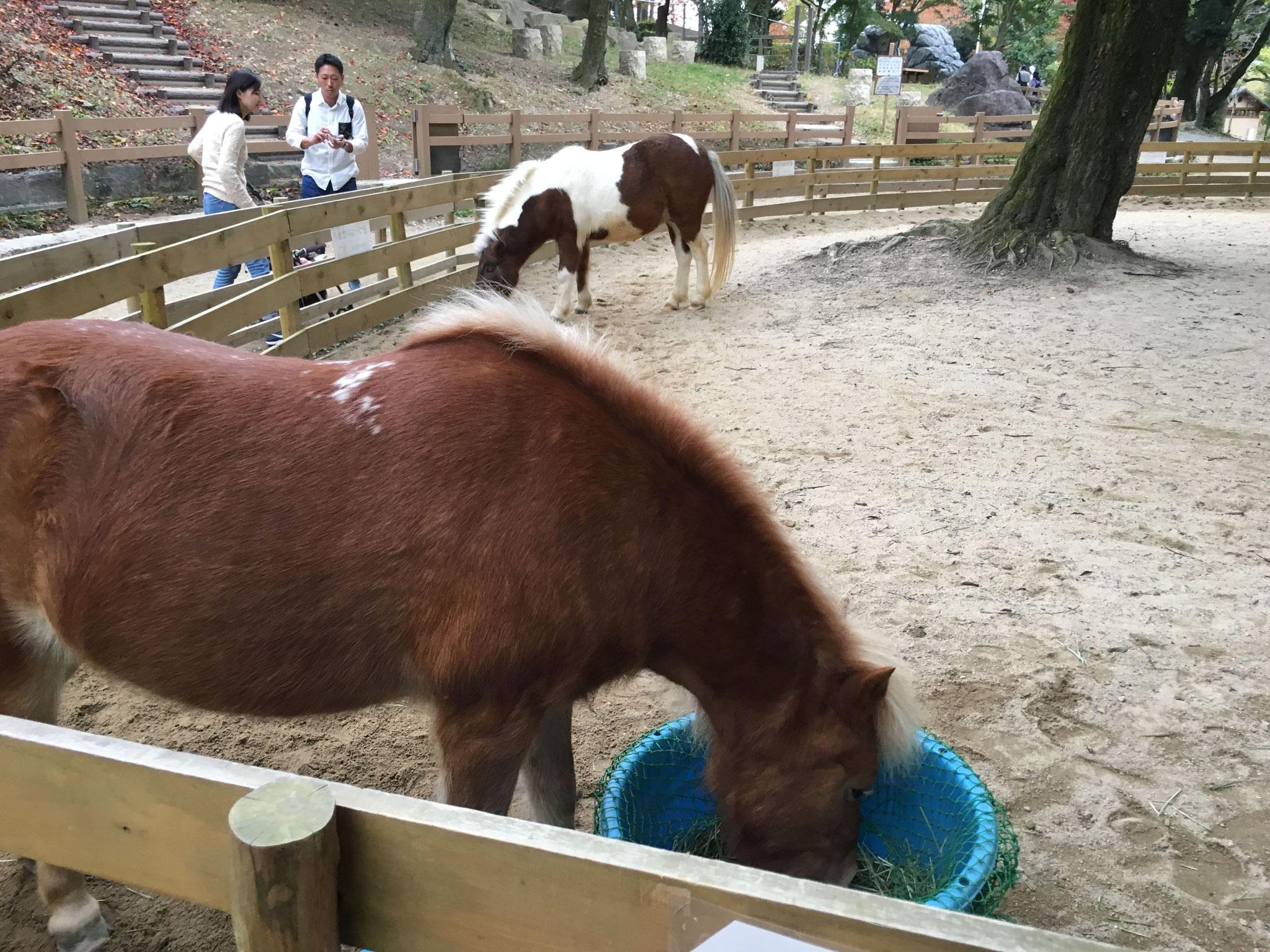 ポニーの乗馬体験