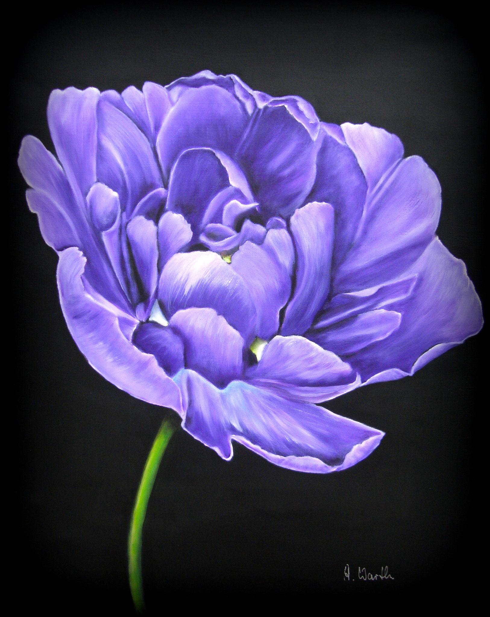 Tulpe, lila   2017 Öl 30 x 40 cm