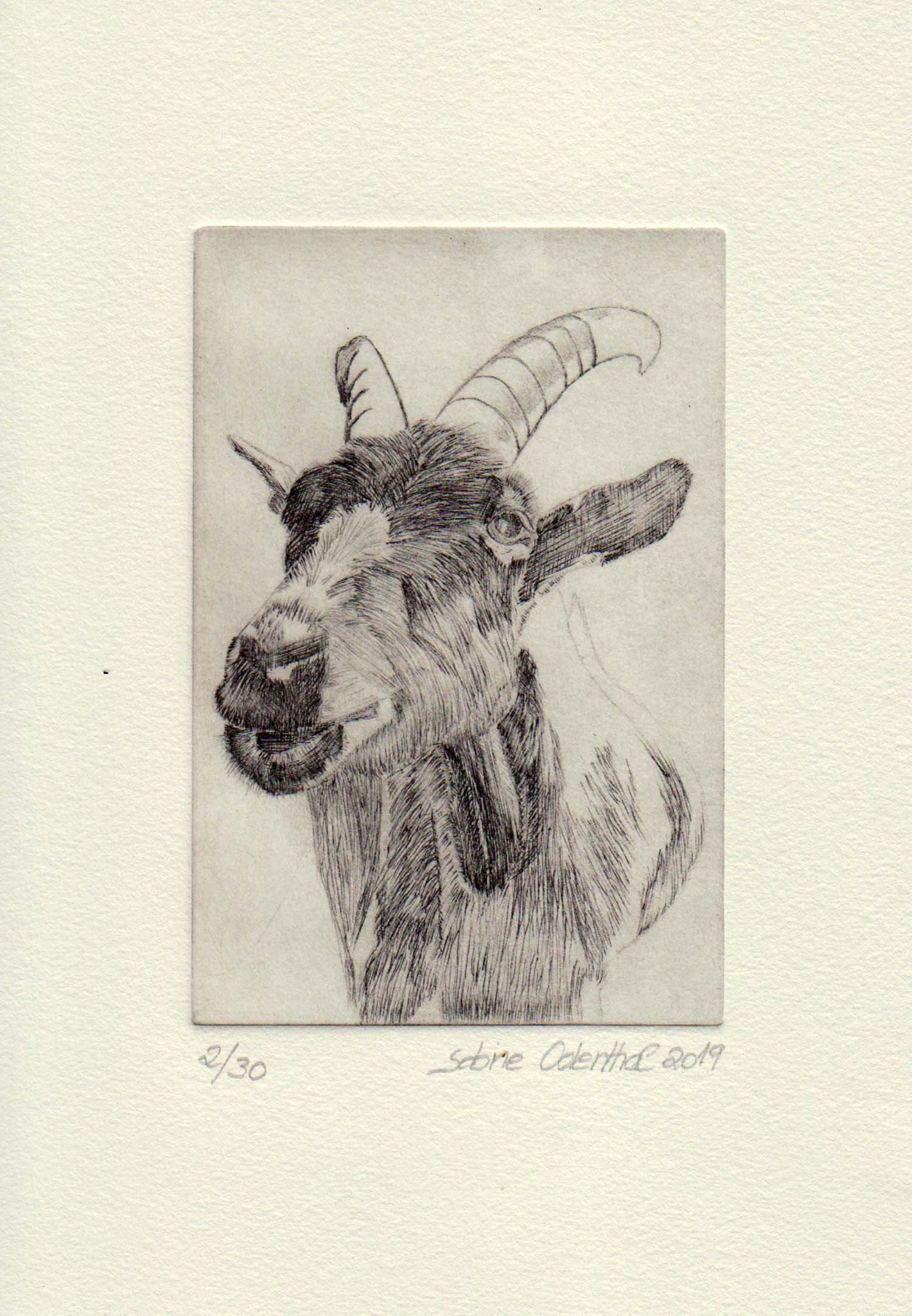 """""""Ziege"""" - Kaltnadelradierung 2019 / 15 cm x 10 cm"""