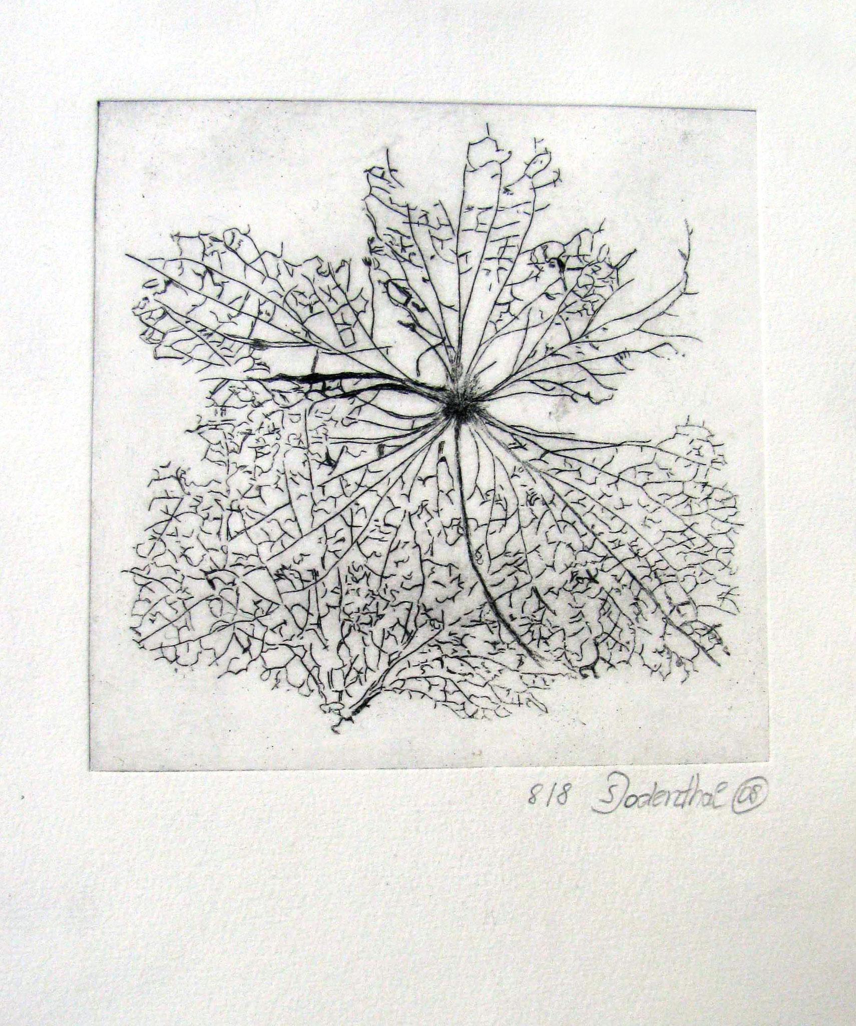 """Leaf"" - Kaltnadelradierung 2008 / 12 cm x 12 cm"