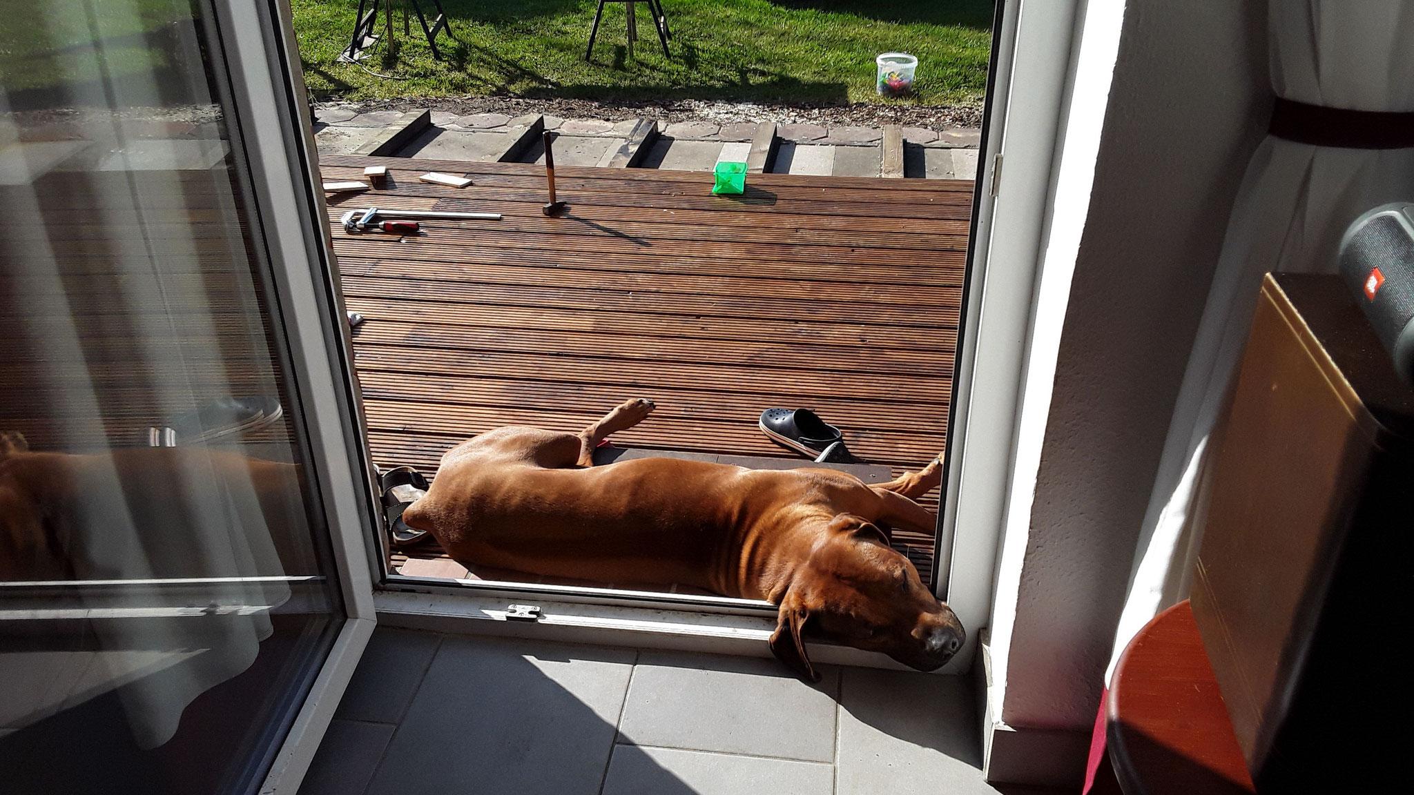 Theo, unser Hund, liegt auf der Baustelle