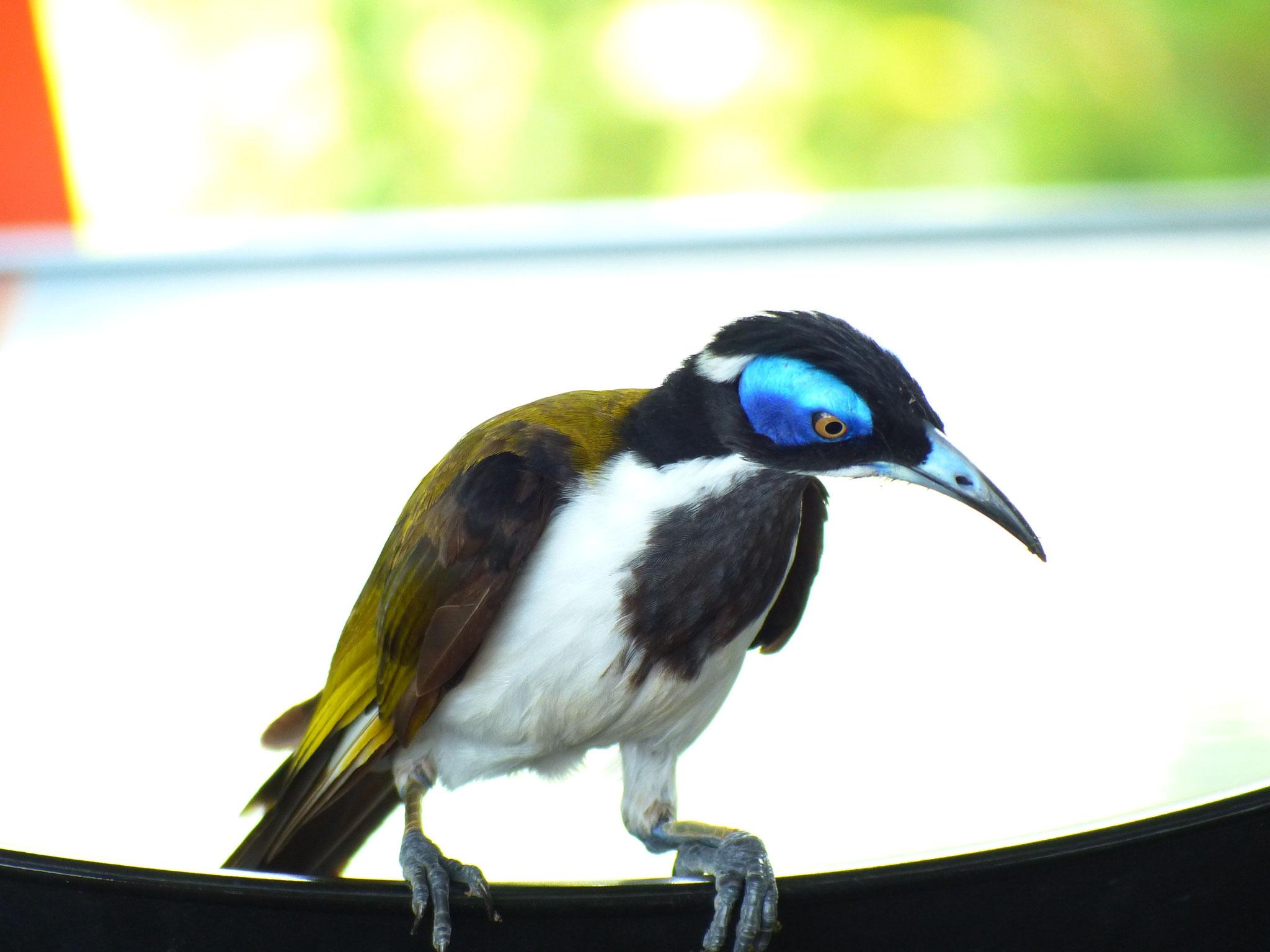 Vous n'avez pas fini de voir des photos d'oiseaux en tout genre!