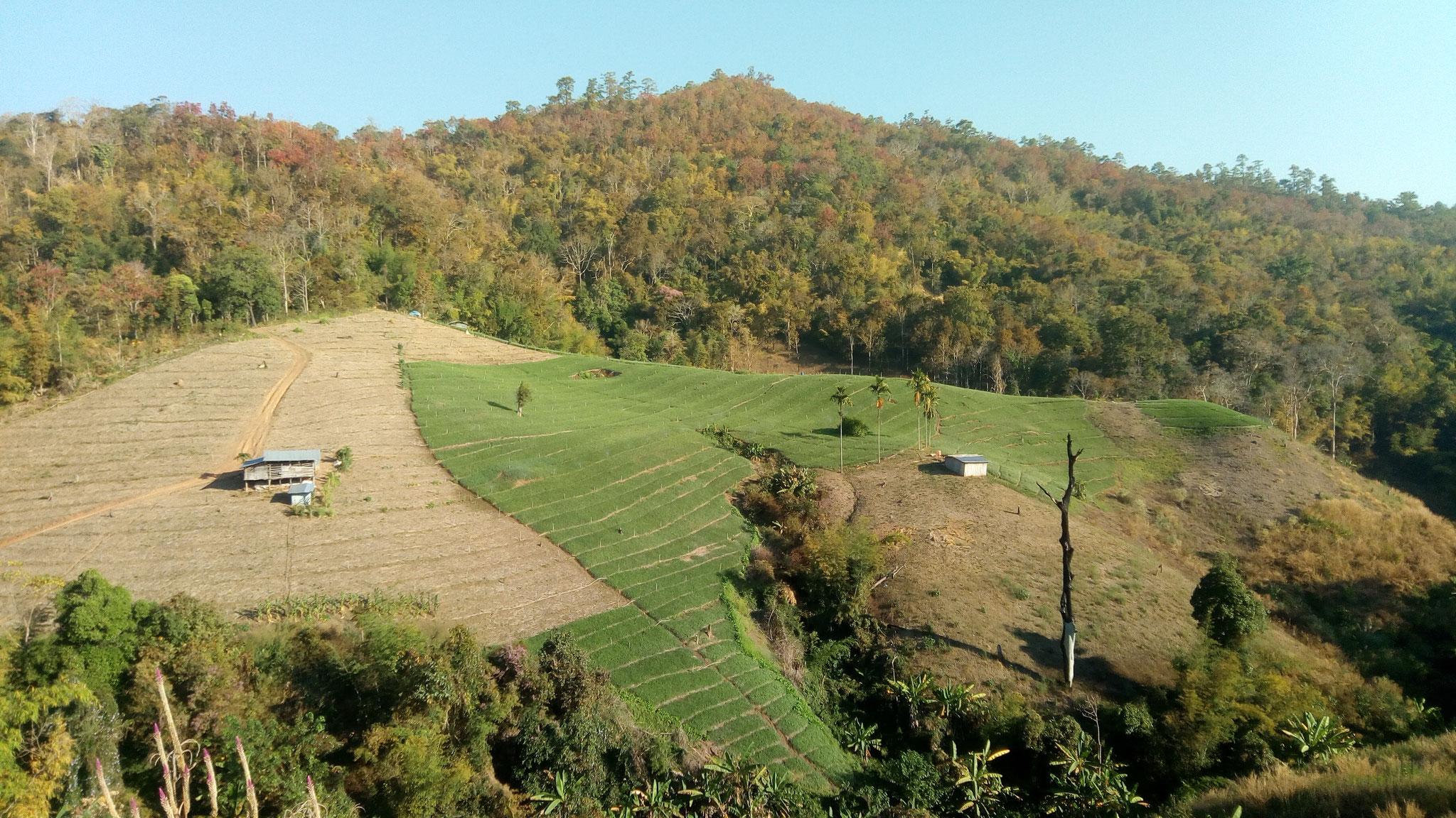 En cette saison seule une partie des plantations est irriguée