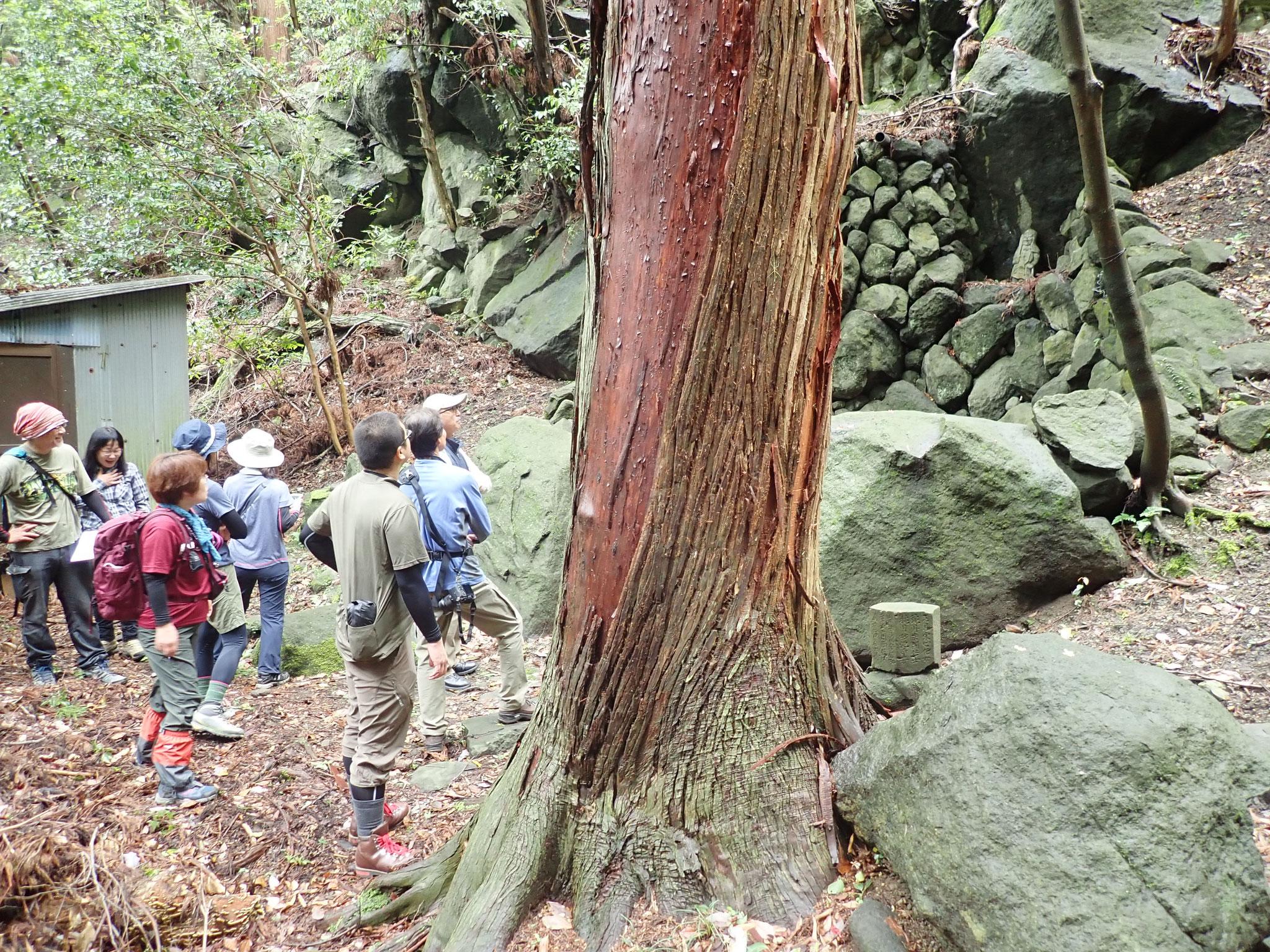 旧鶴林寺にある薬師の滝にて