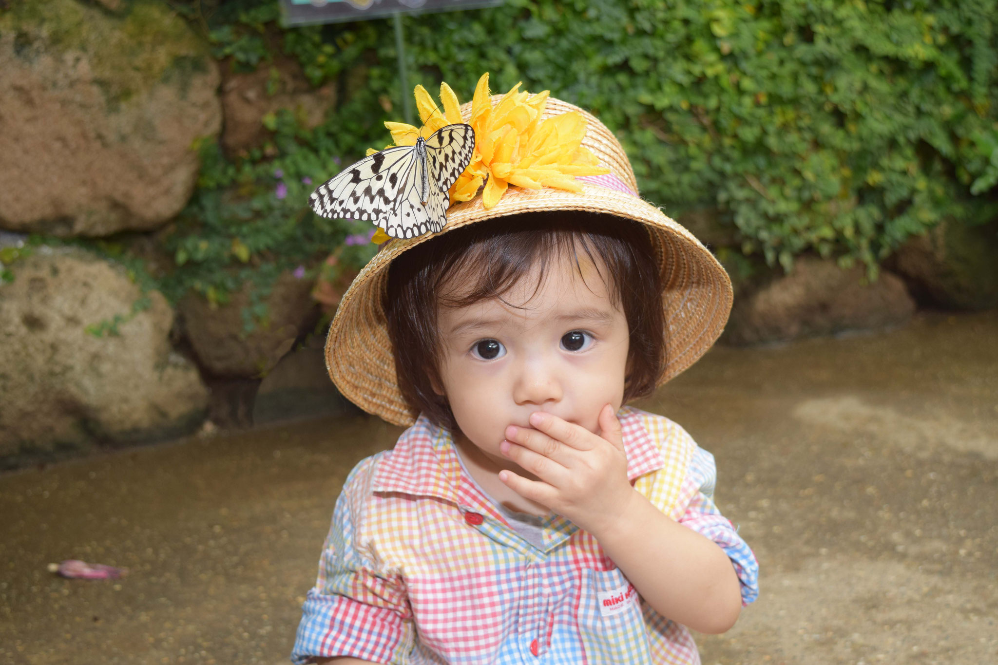 Butterfly gathering hat
