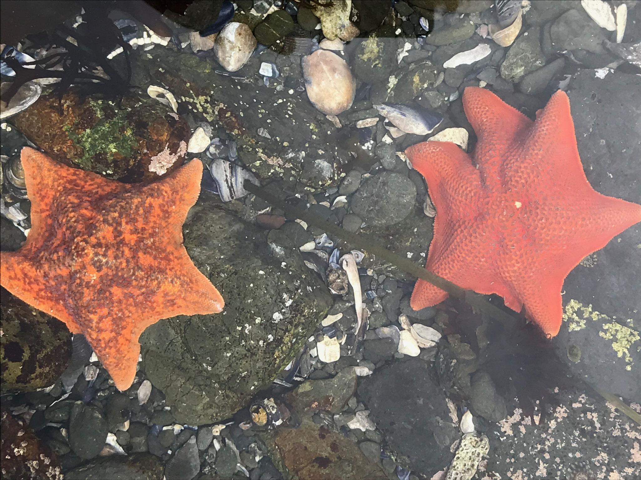 Bei Ebbe nach Meerestieren Ausschau zu halten ist auch für Grosseltern sehr interessant.