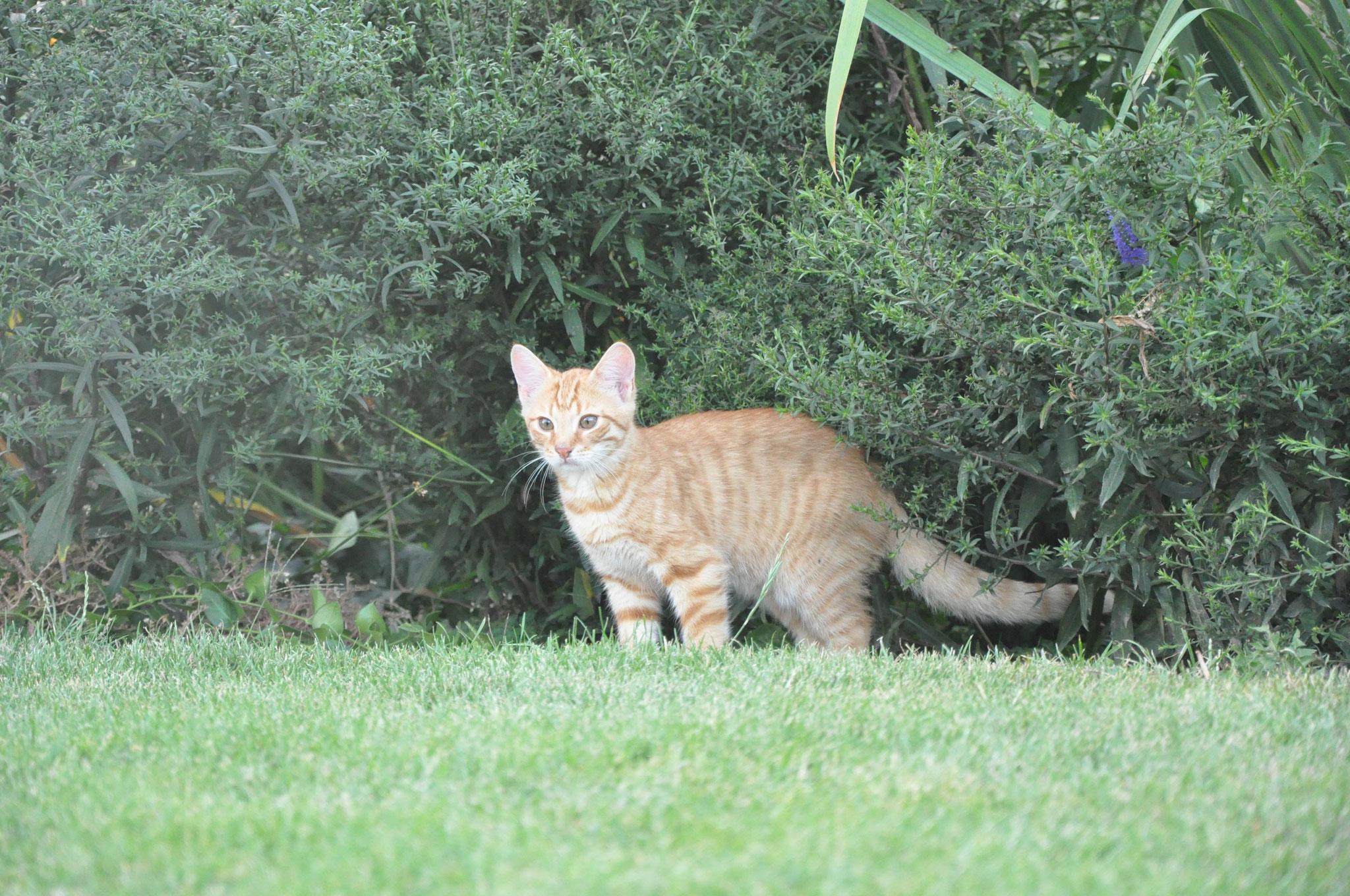 Der neugierige Filou