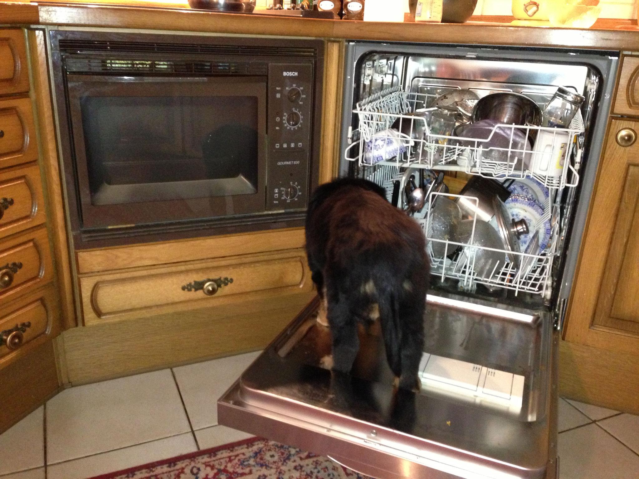 Ich mach den Abwasch.