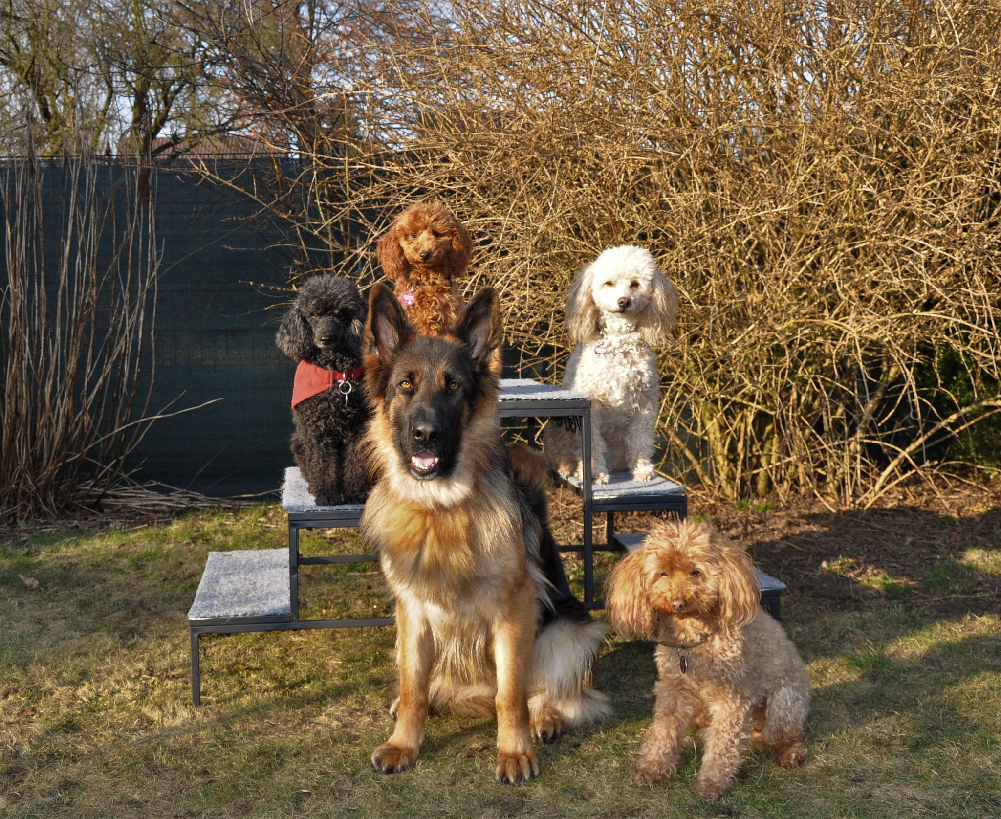 Ich war so stolz auf mein tolles Team, 5 Großartige Hunde!