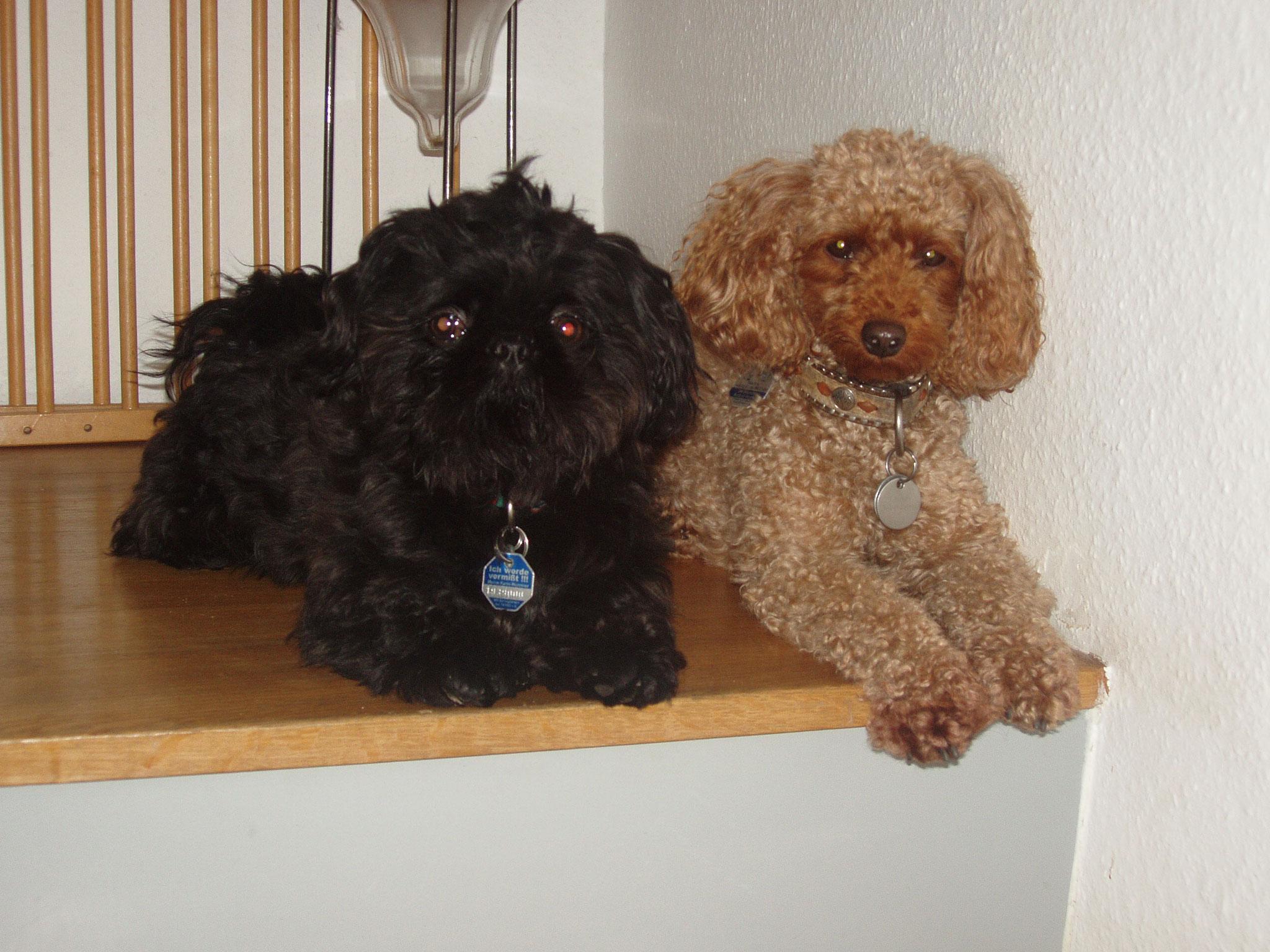 Ginas bester Freund Garry - als er wegzog fing ich mit dem Tierschutz an.