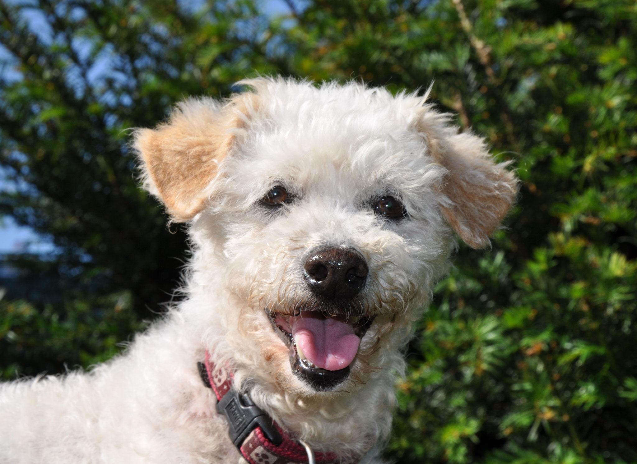 Mell , 10 J. wohnt mit Kim mit einen weiteren Hund in einem Haus mit Garten