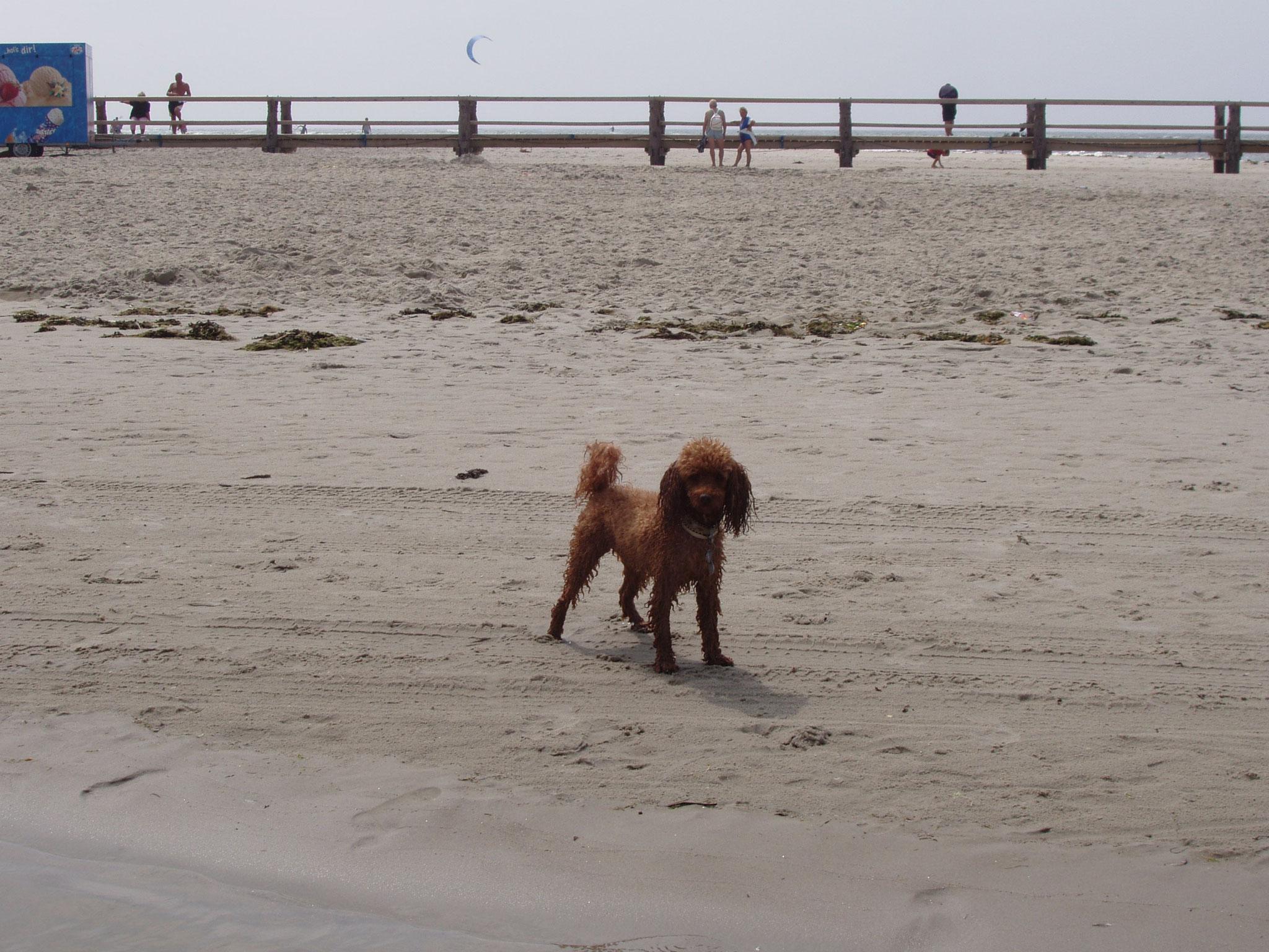 Sie liebte es, am Strand zu laufen,