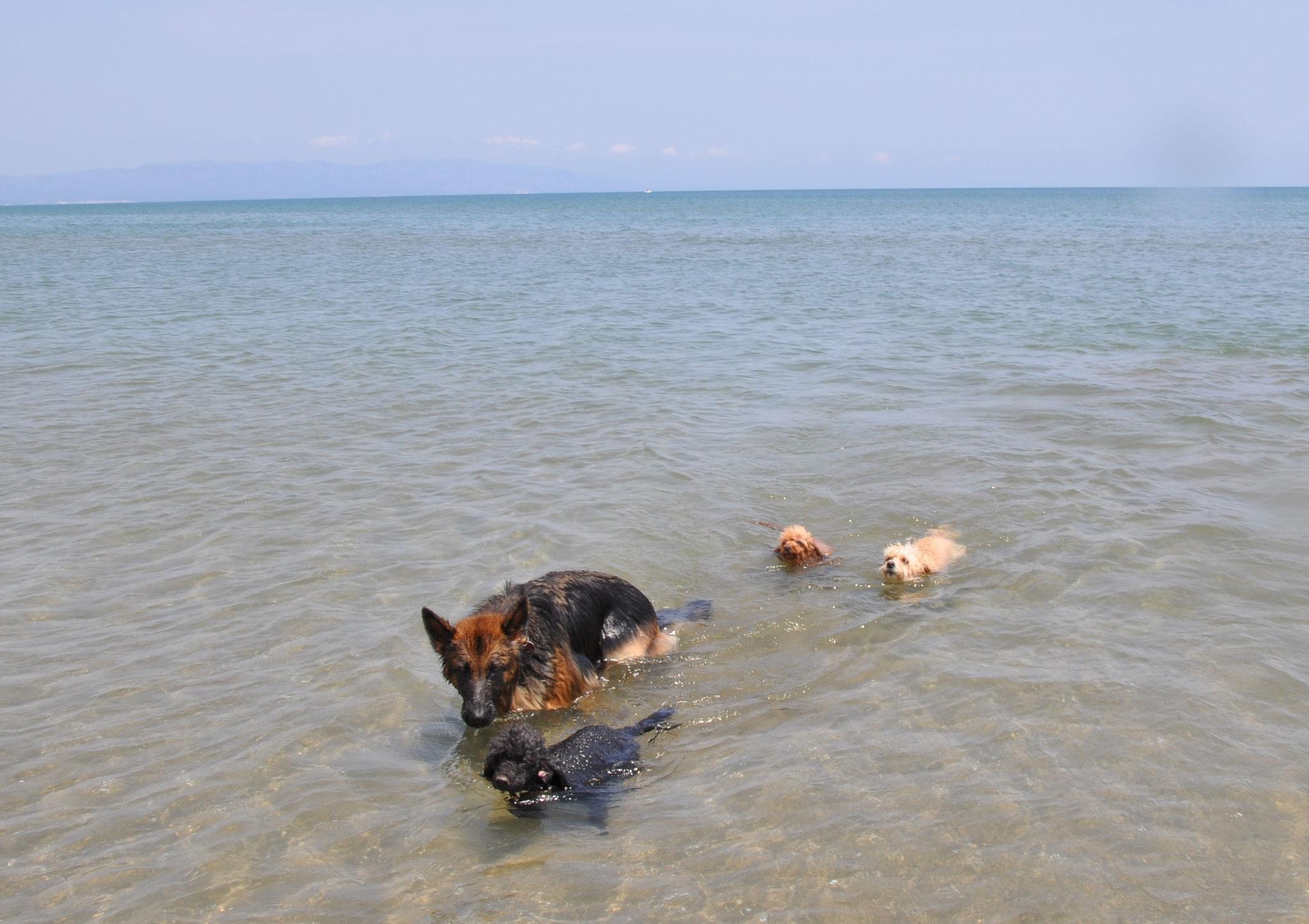 geschwommen ist sie nur selten