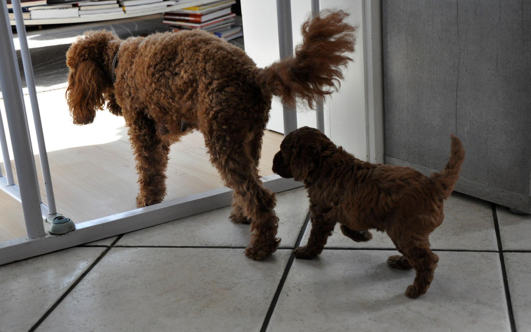 Archy hat ein Ausflug durchs Haus mit Mama super gemeistert.