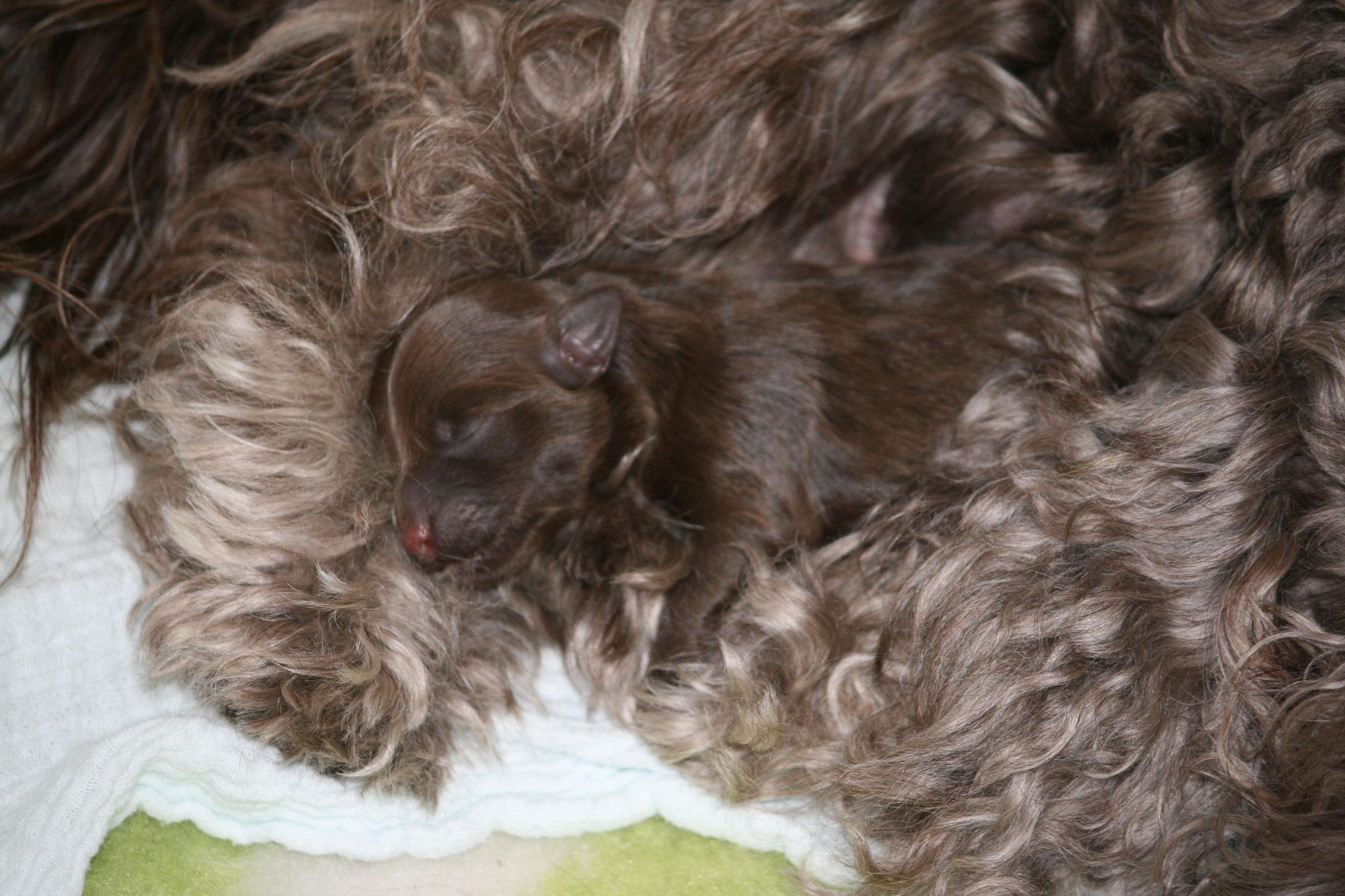 Klein Finley kuschelt mit Mama