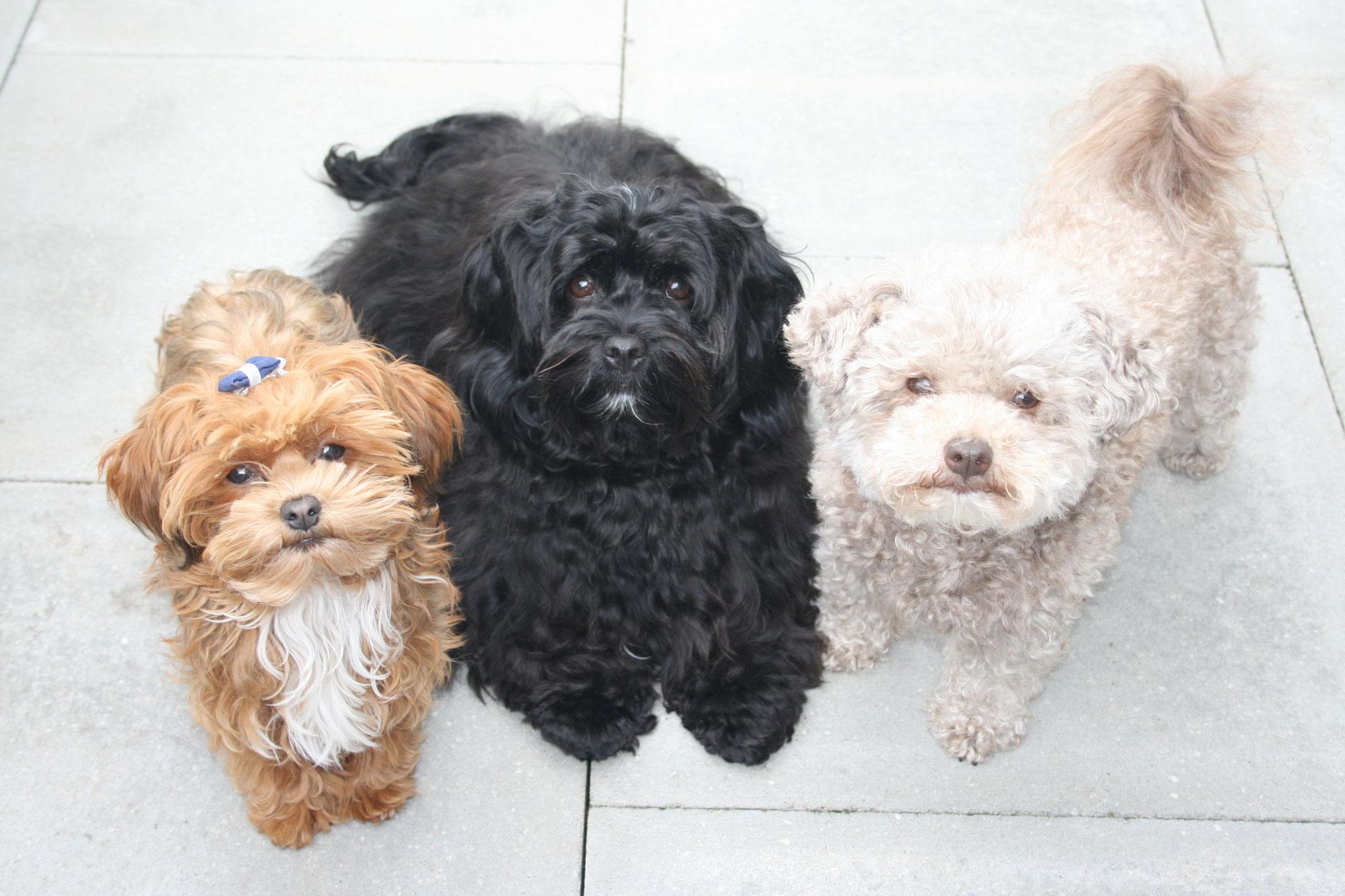 Mein Trio im Juli 2019 Greta, Carlotta und Baileys