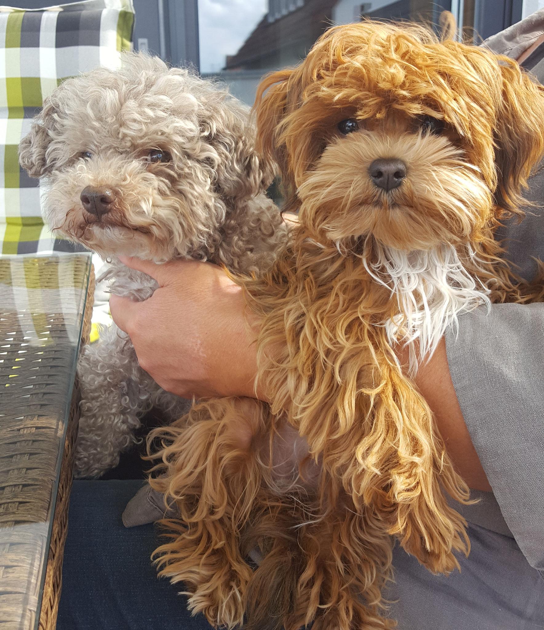 Baileys und Greta, Juli 2019