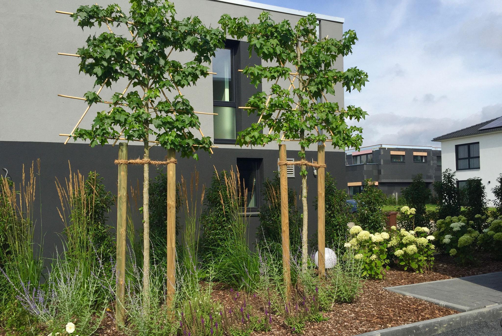 Garten modern 3