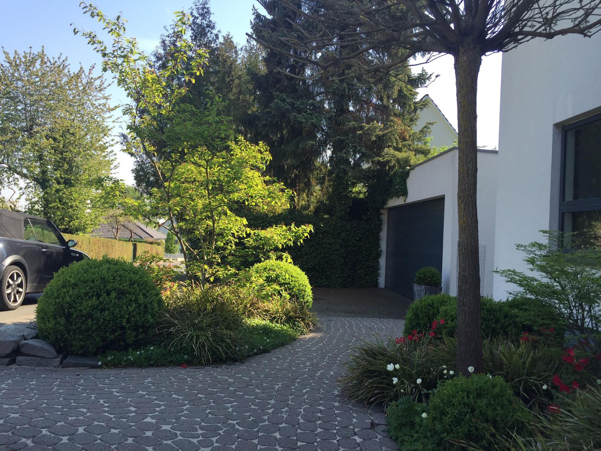 Vorgarten 2