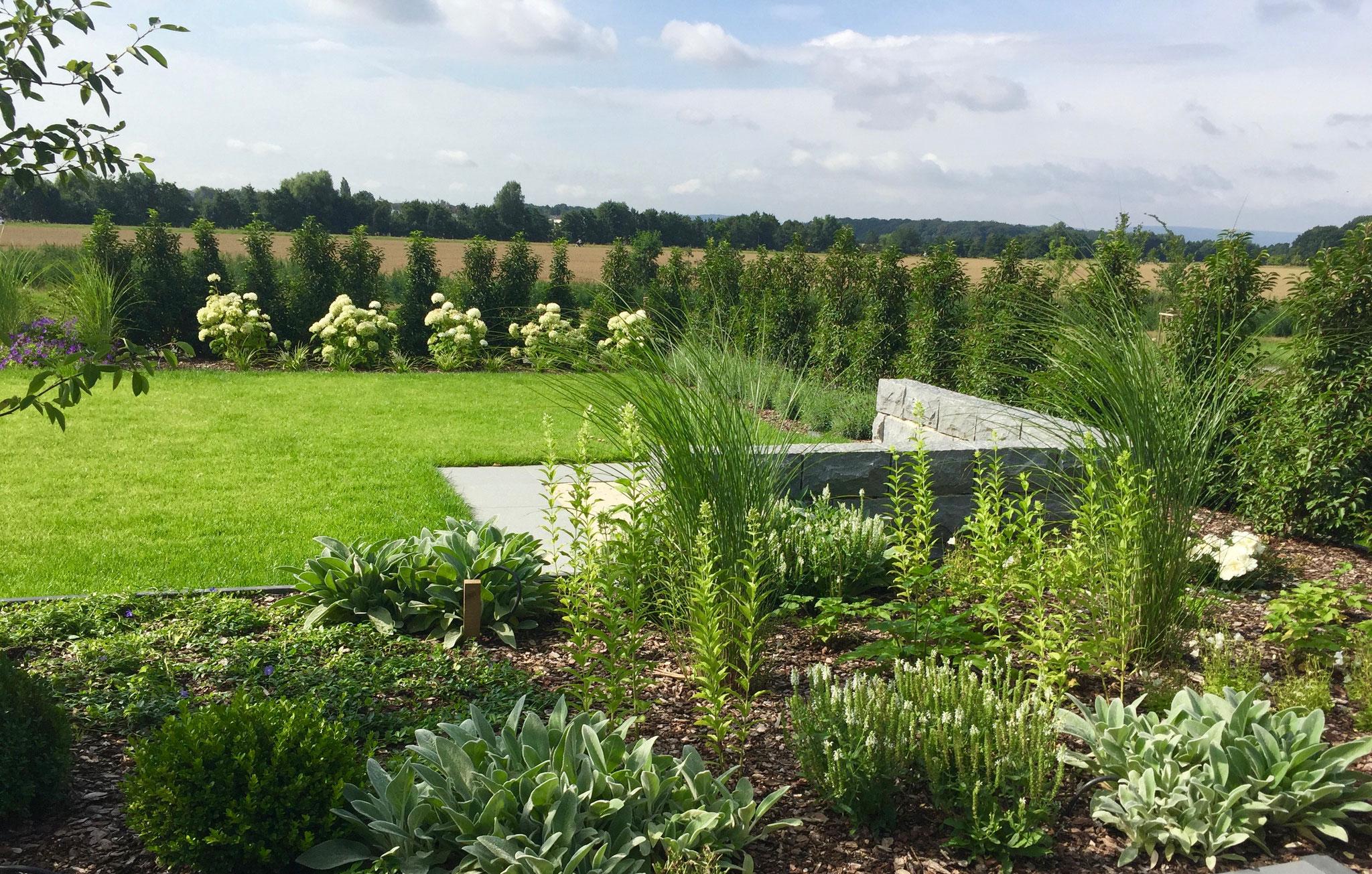 Garten modern 2