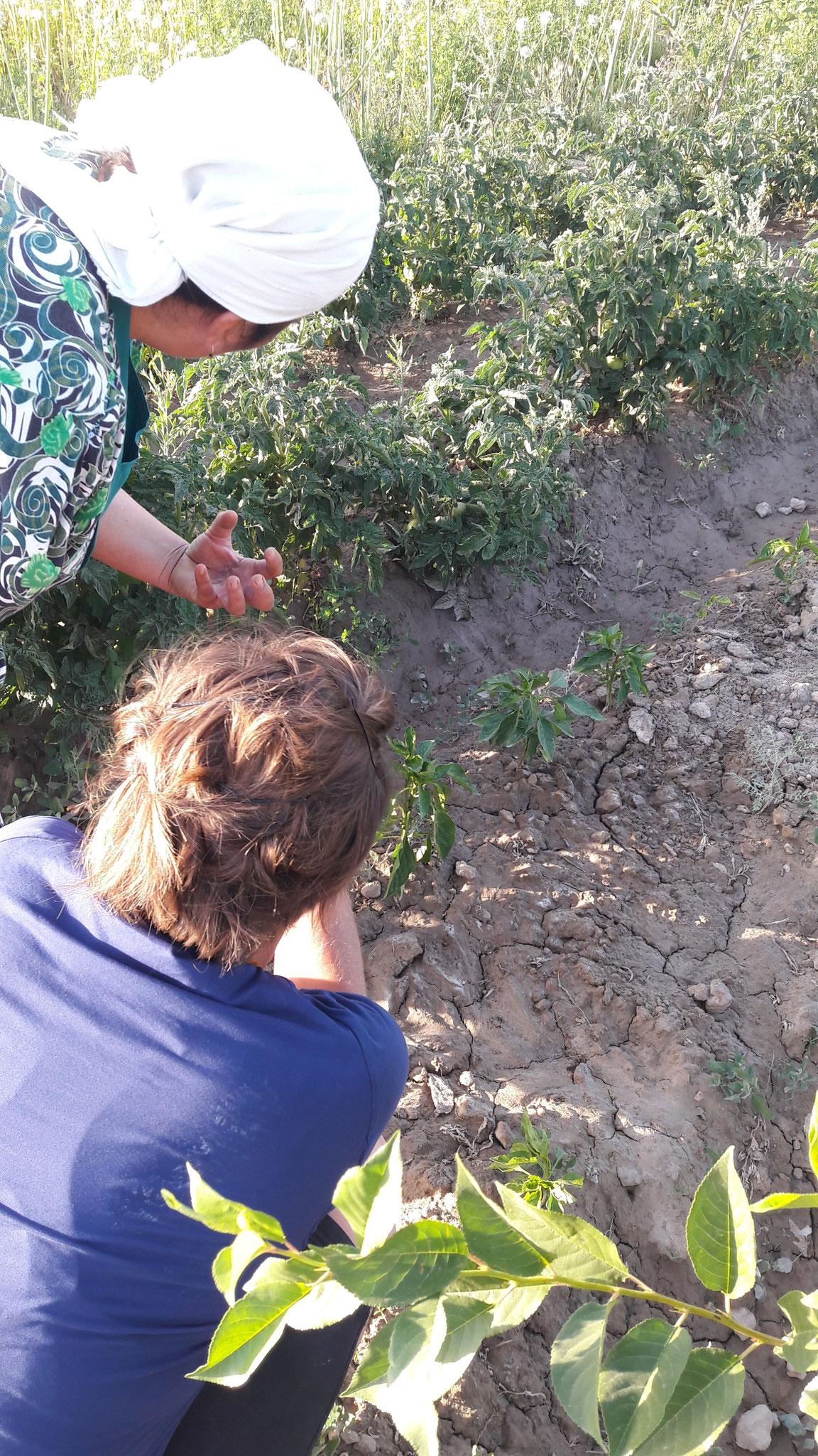 Am fachsimpeln :) über Gartenkunde