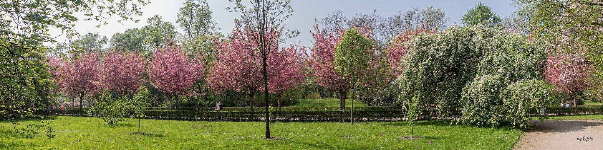Panoramaaufnahme im Dortmunder Rombergpark